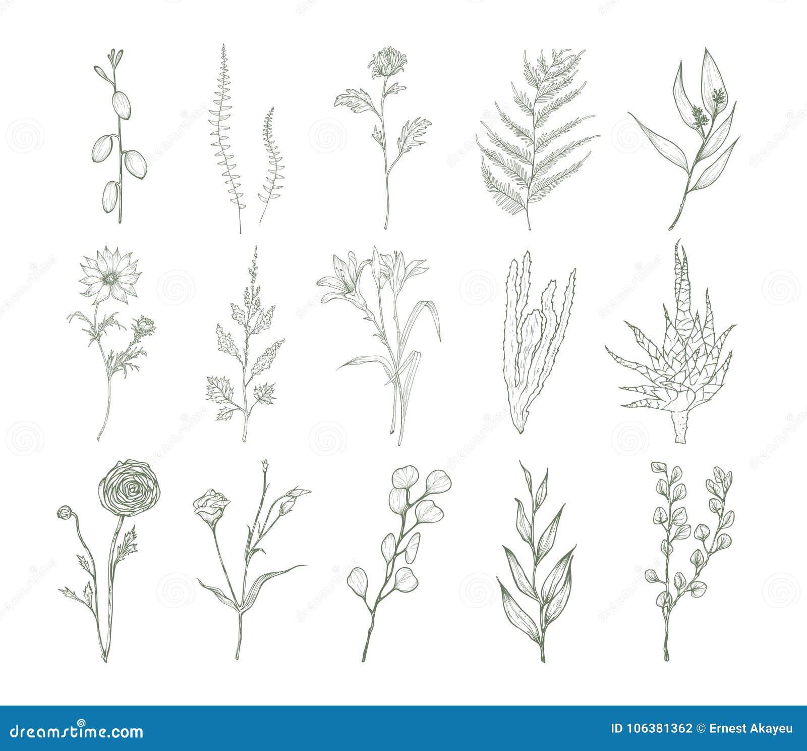 Ensemble De Dessins Botaniques Détaillés Des Fleurs Des