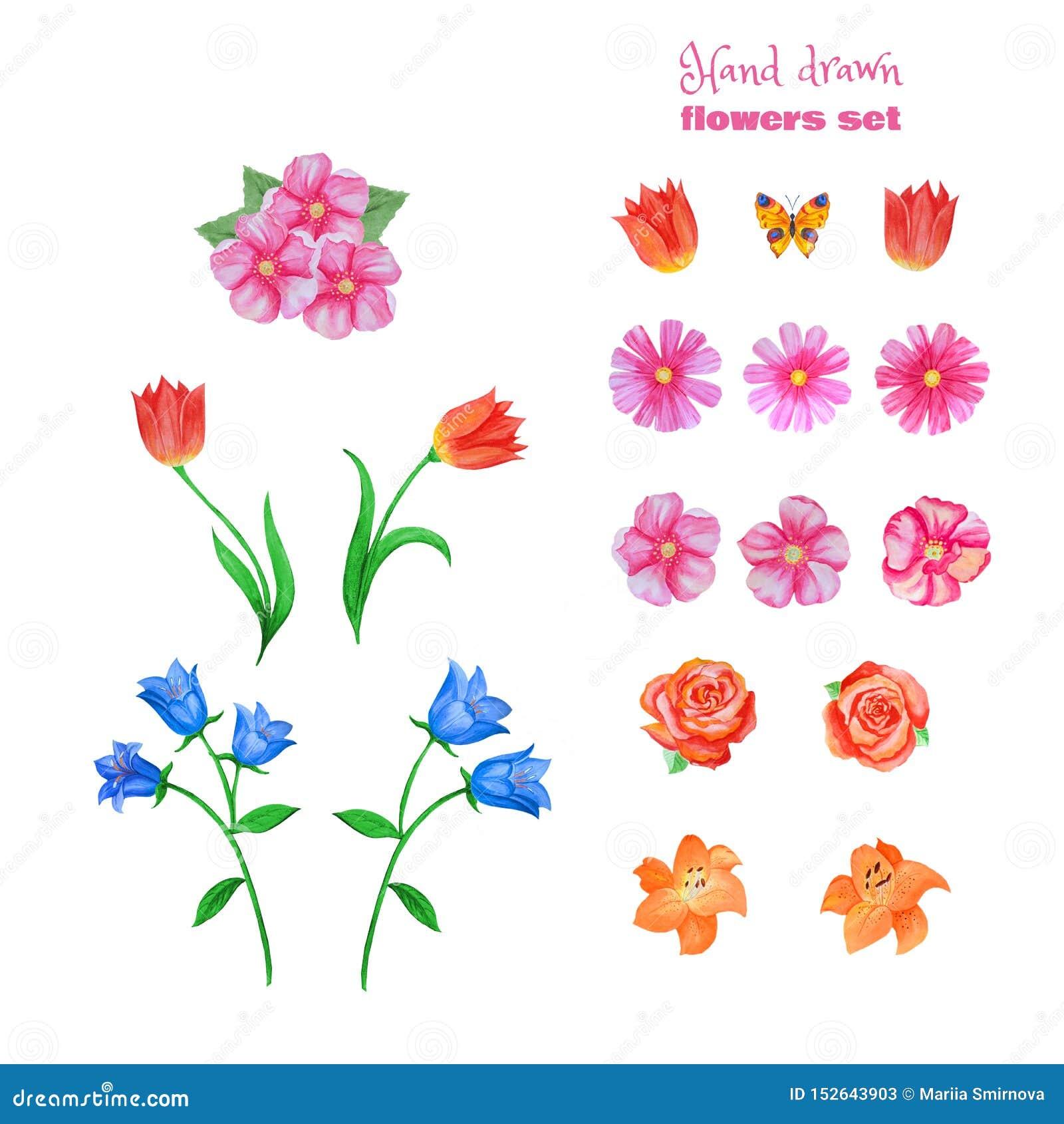 Ensemble de diff?rentes fleurs d isolement sur le blanc Pavots, tulipes, roses, lis, bleuets, cloches bleues et autre