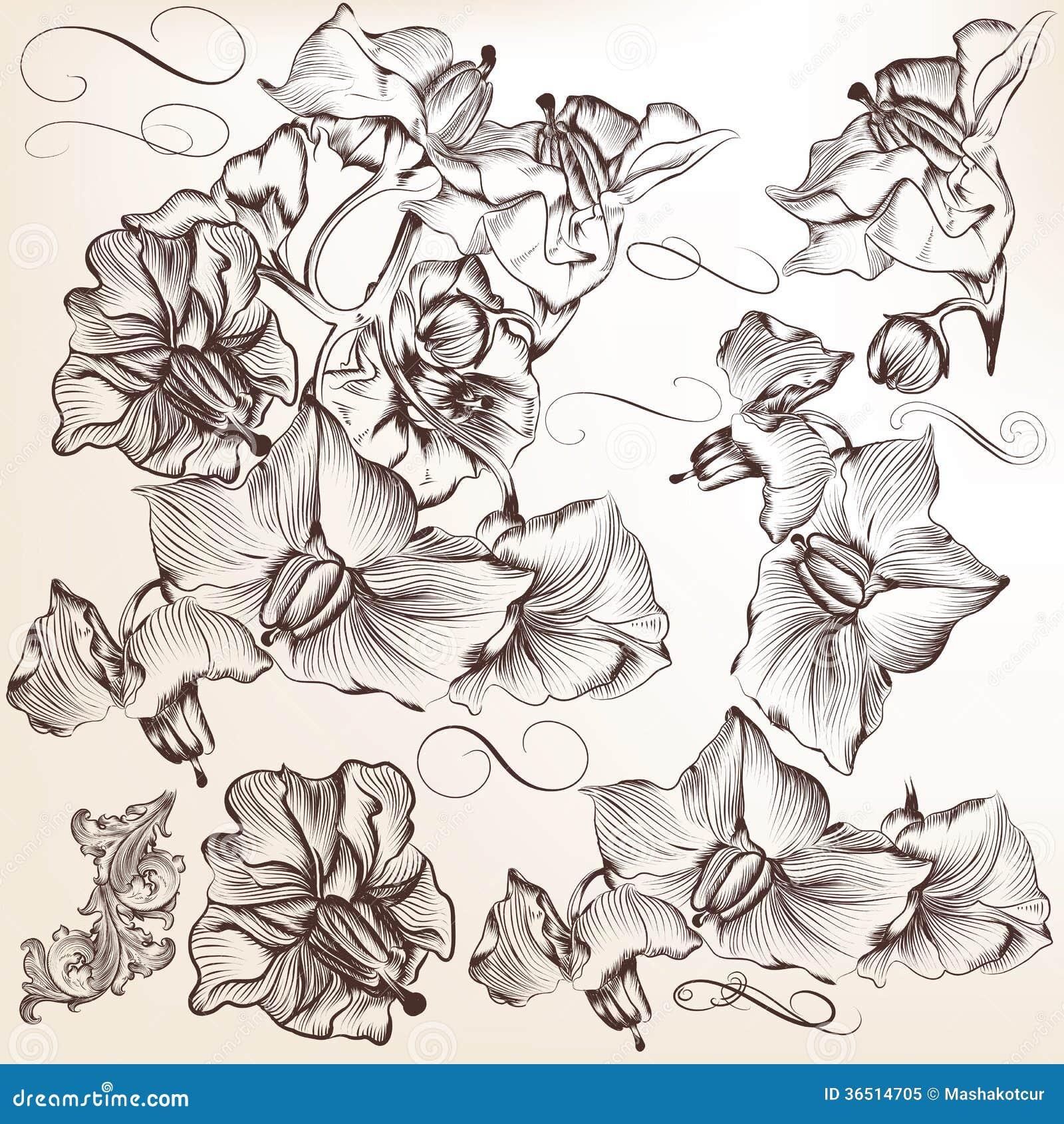 Ensemble de fleurs tirées par la main détaillées de vecteur