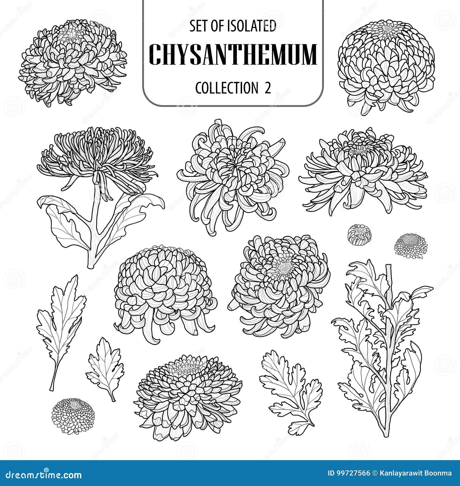Ensemble de la collection d isolement 2 de chrysanthème Style dessiné mignon d illustration de fleur à disposition Avion d ensemb