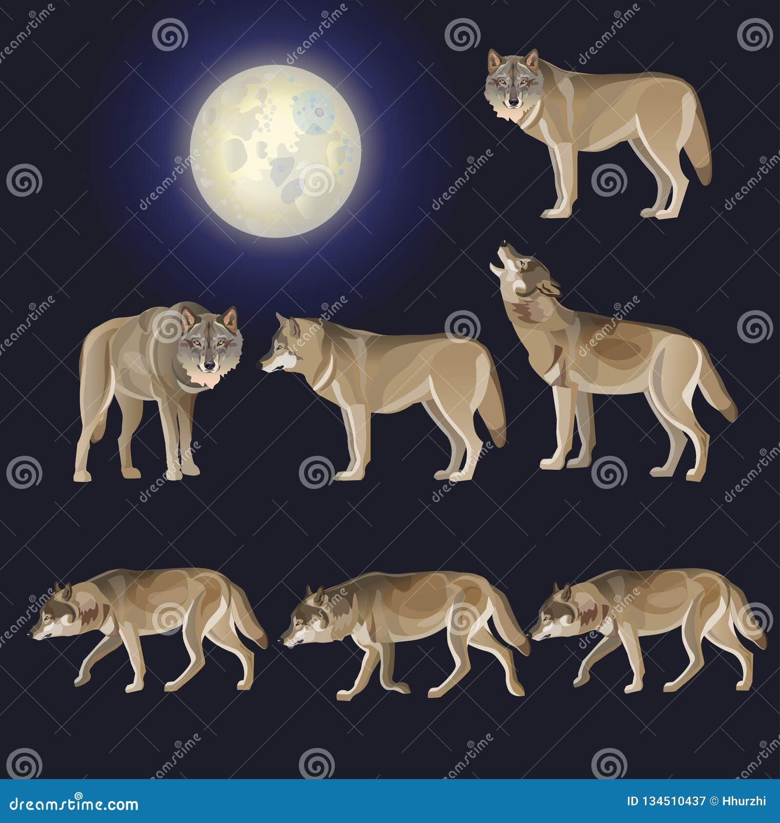 Ensemble de loups gris