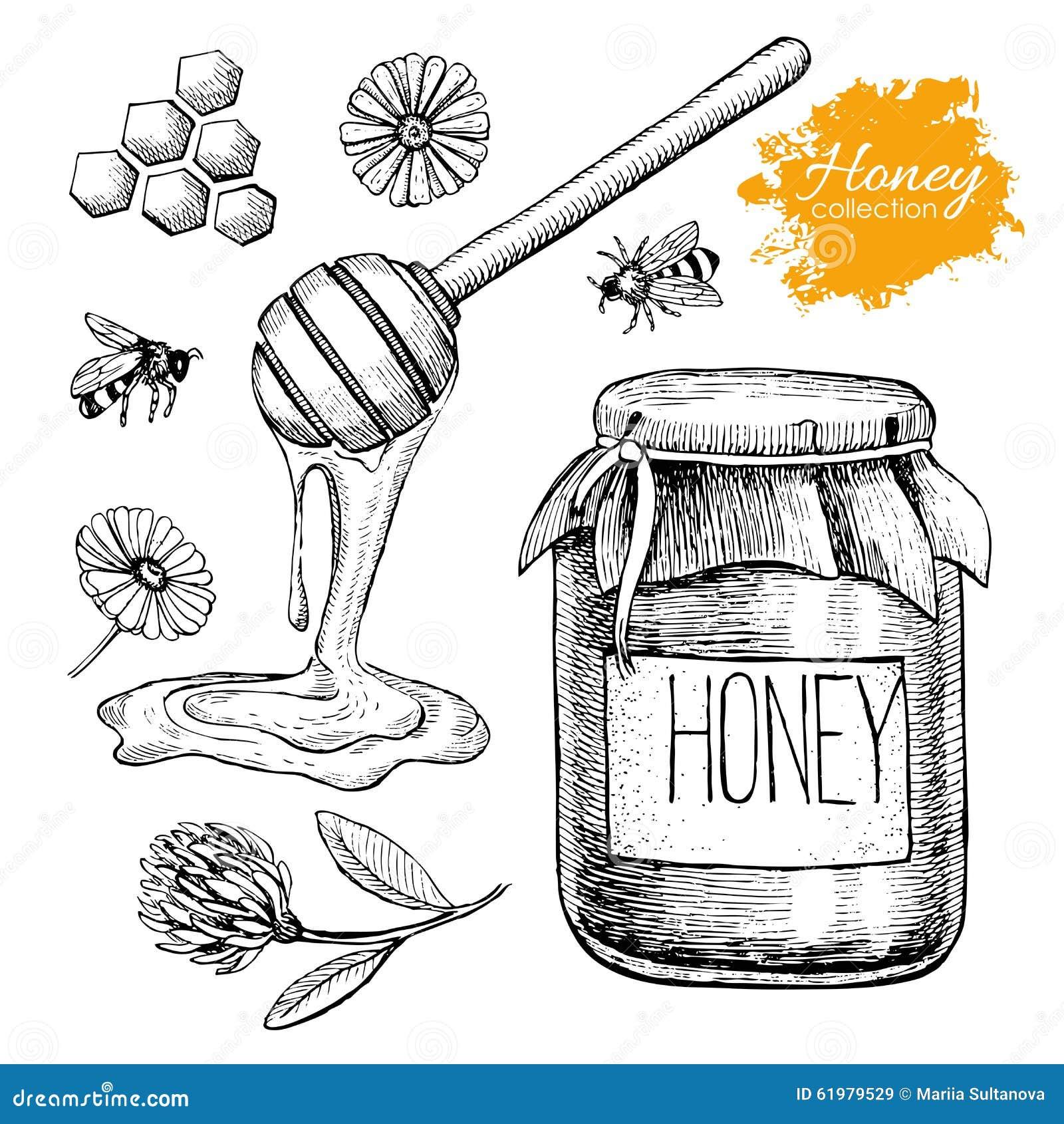 Ensemble de miel de vecteur Illustration tirée par la main de vintage