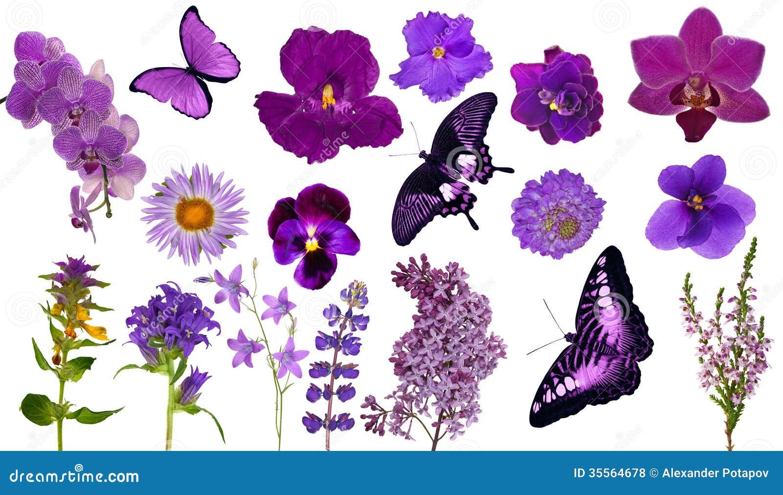 ensemble de papillons et de fleurs lilas de couleur photos libres de droits image 35564678. Black Bedroom Furniture Sets. Home Design Ideas