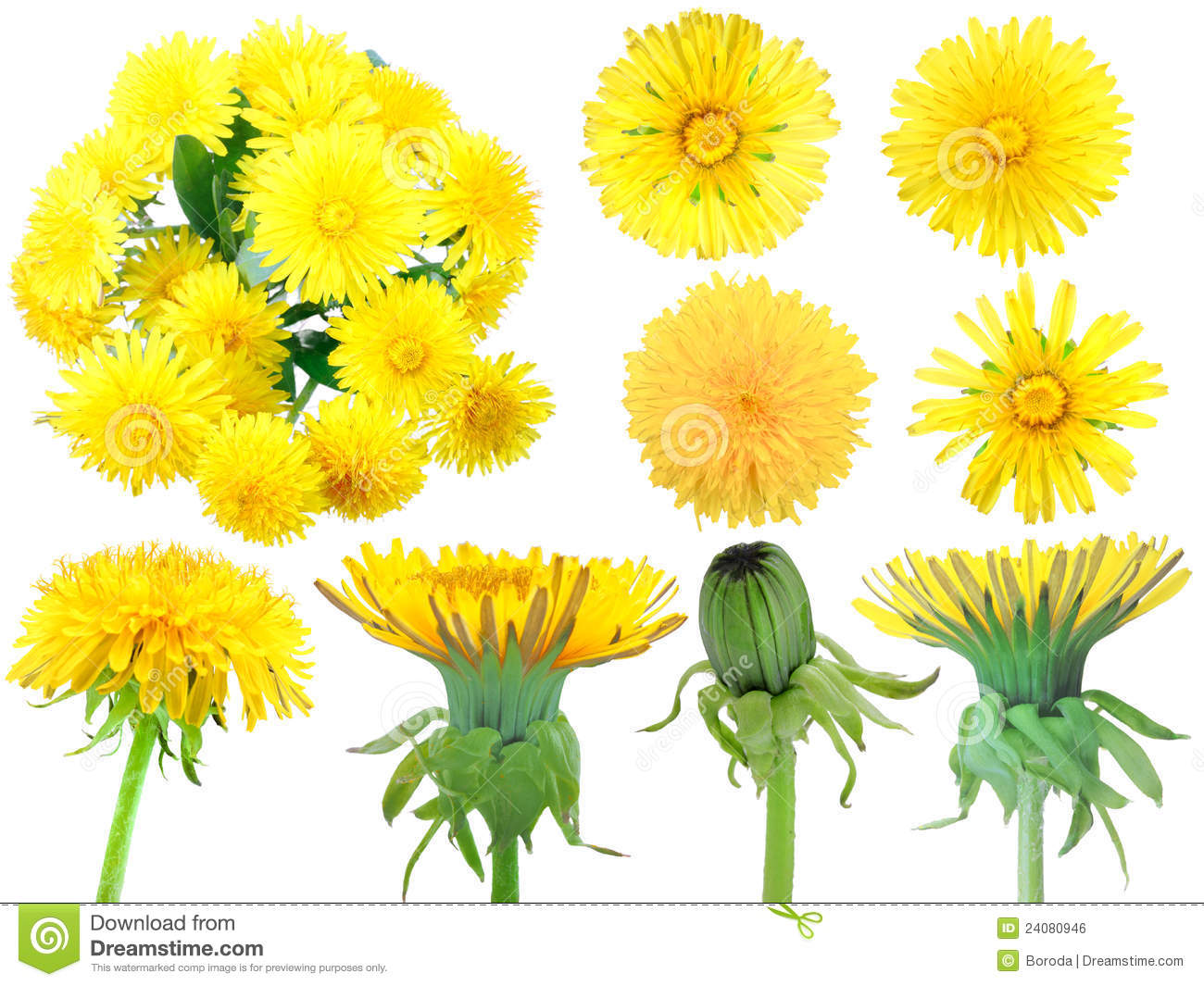 Ensemble De Pissenlit Fleurs Jaunes Photo Stock Image Du