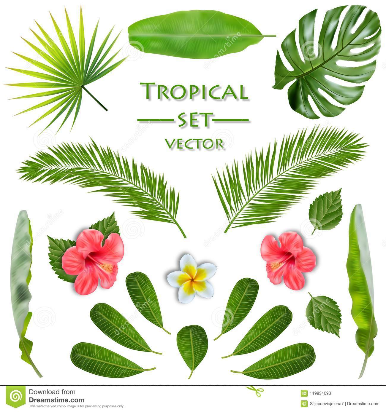 Ensemble de plante tropicale Vecteur