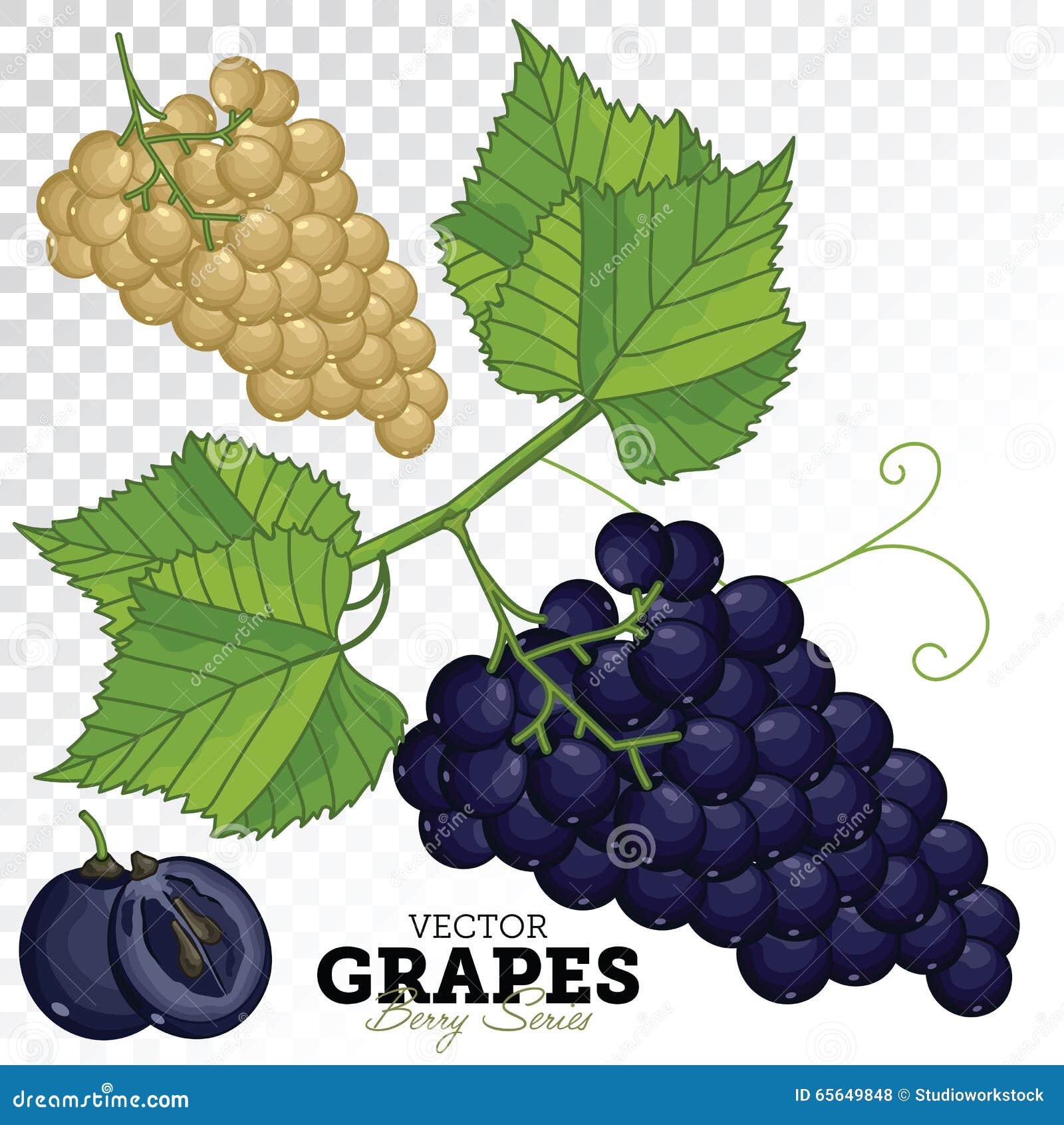 Ensemble de raisin, vecteur