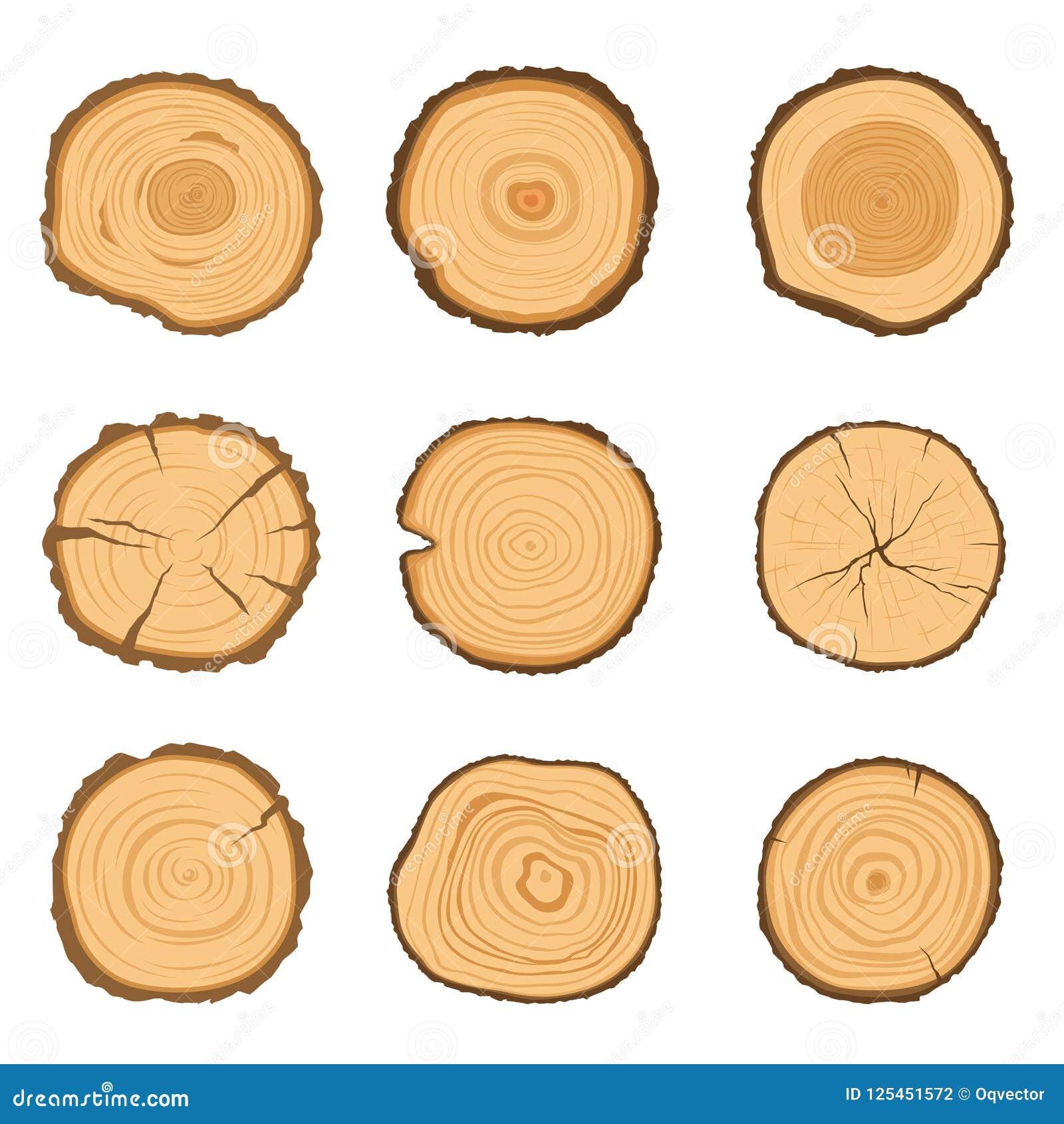 Ensemble de sections transversales rondes d un arbre avec un modèle différent d anneau d isolement sur un fond blanc Illustration