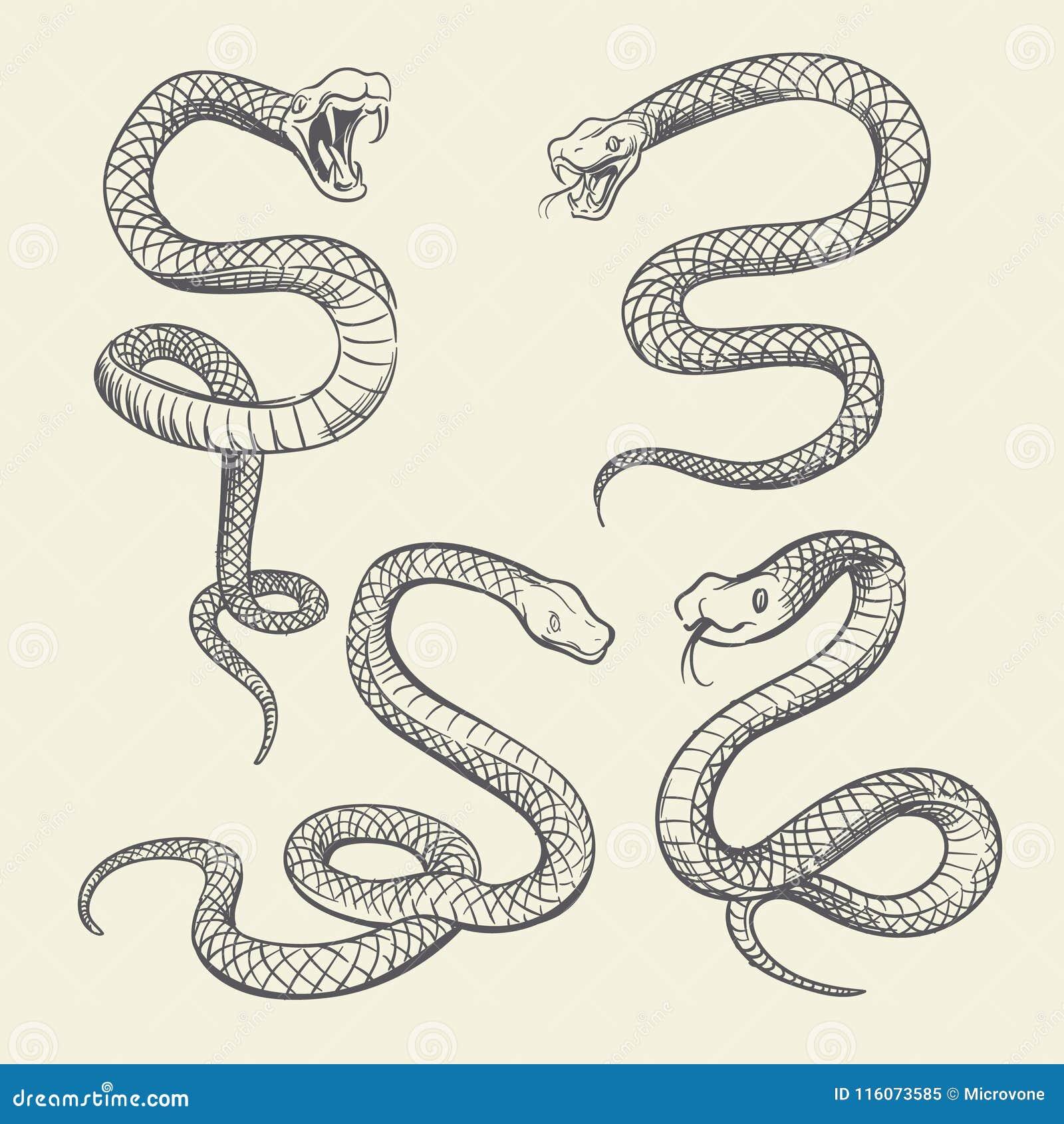 Dessin Tatouage Serpent ensemble de serpent de dessin de main conception de vecteur de