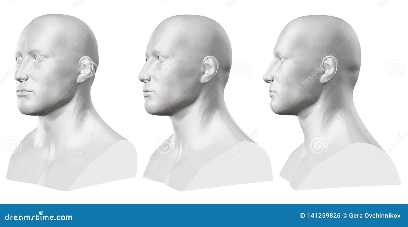 Ensemble de vecteur de bustes masculins d isolement des mannequins sur le fond blanc 3d Buste masculin de différents côtés Vecteu