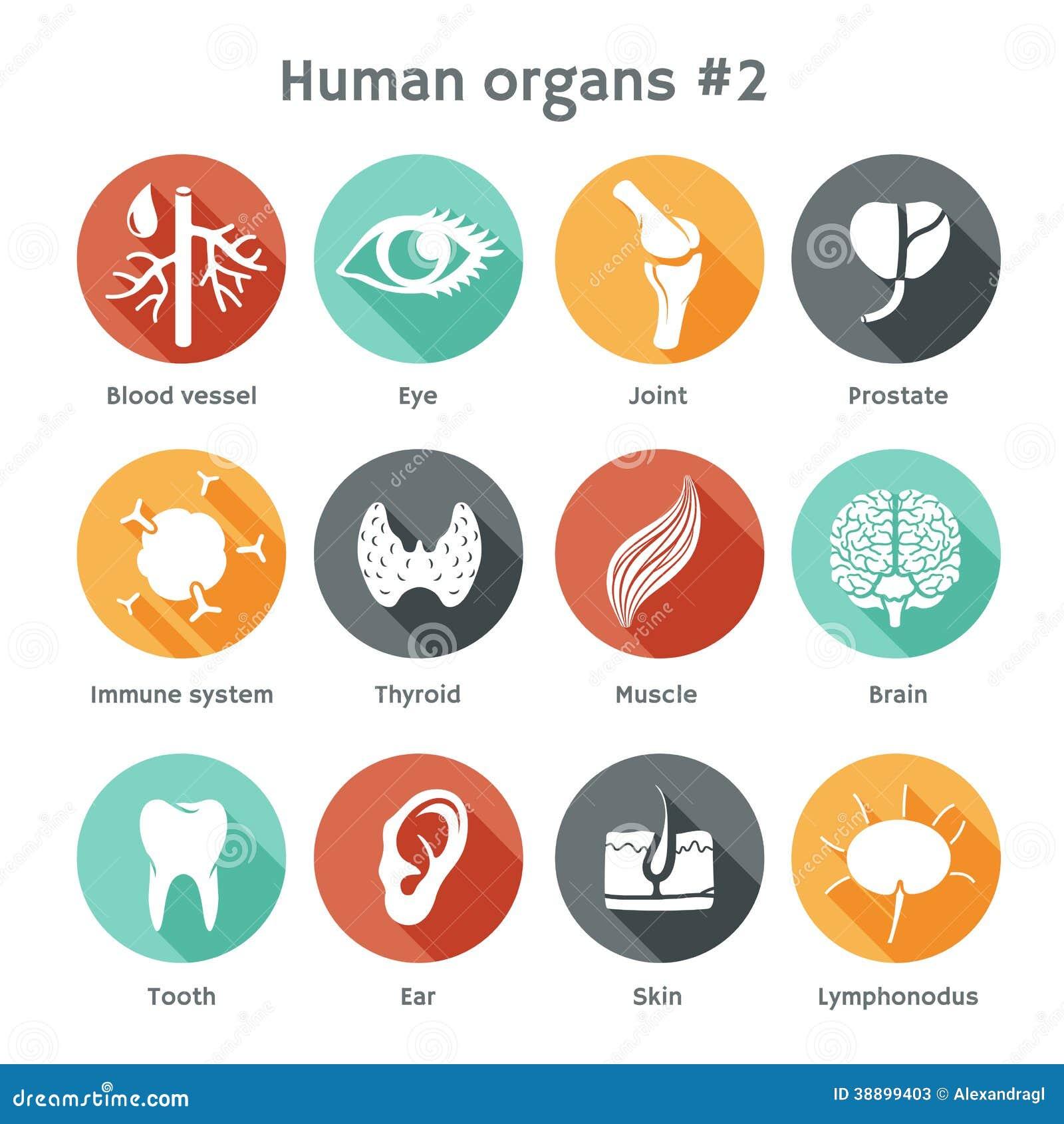 Ensemble de vecteur d icônes plates avec les organes humains
