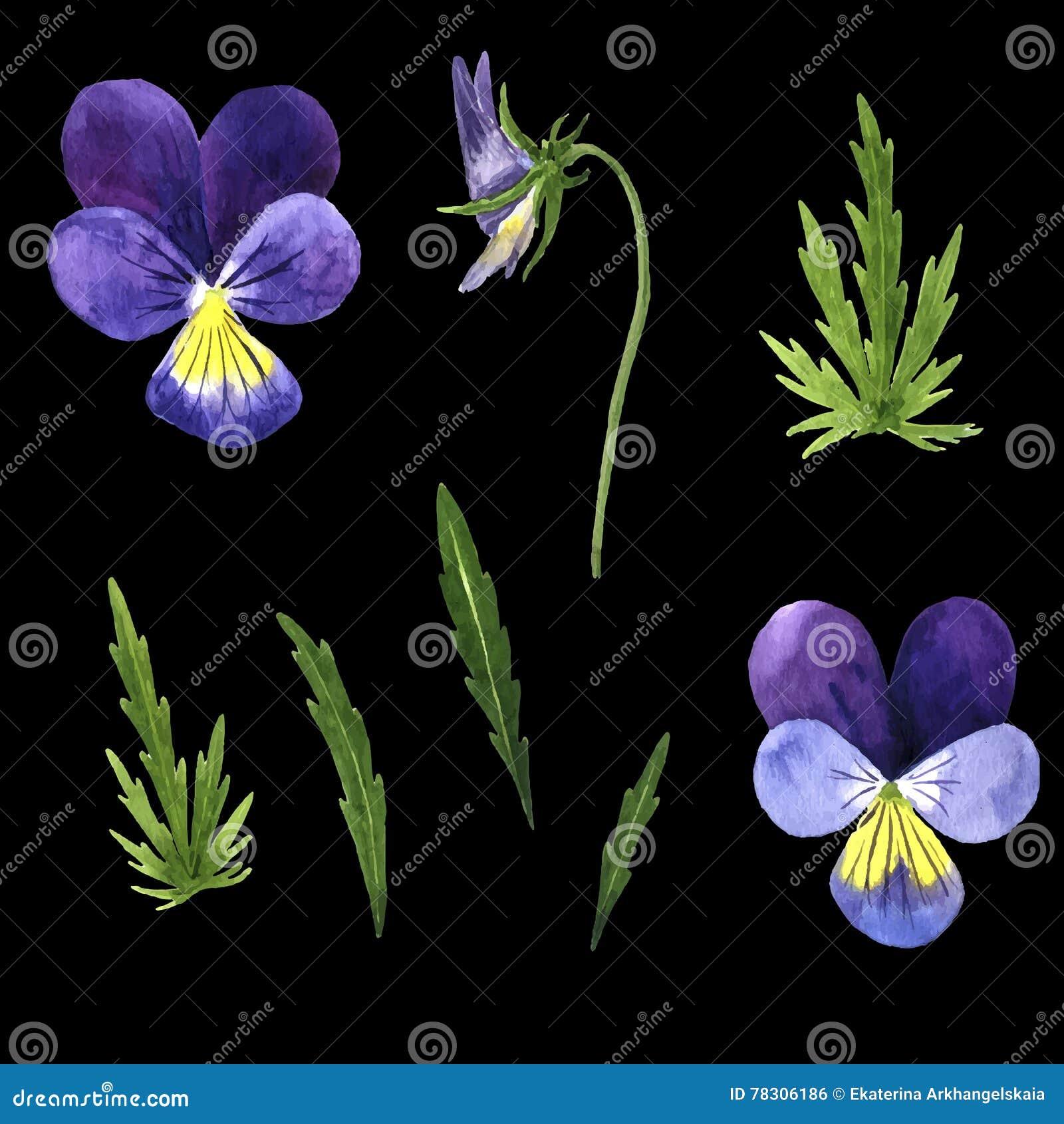 Ensemble De Vecteur De Fleurs Violettes De Dessin D Aquarelle