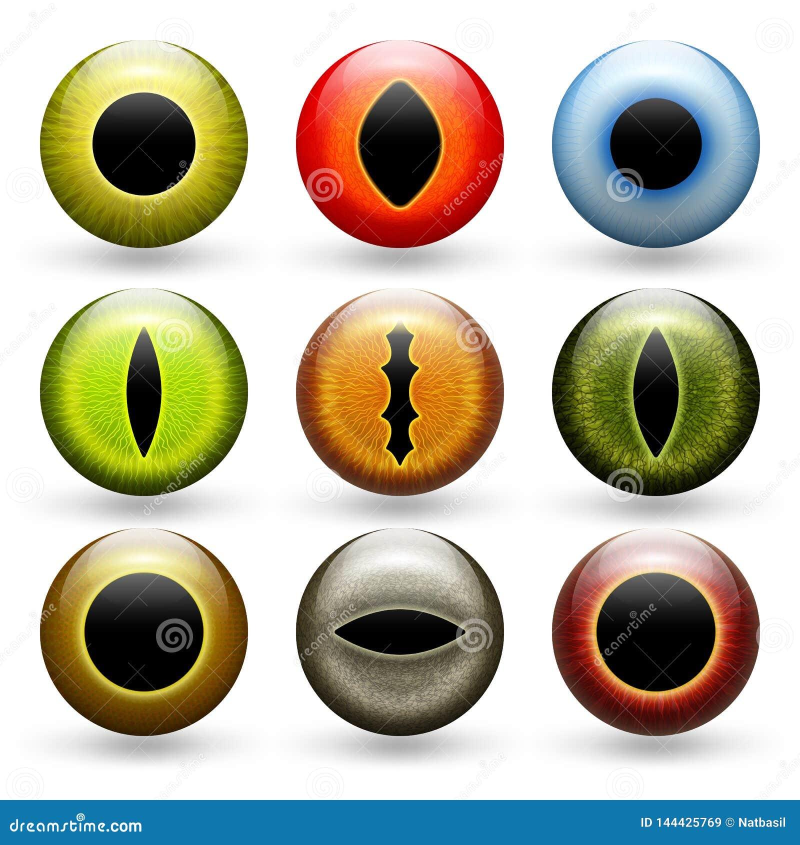 Ensemble différent de yeux d animaux