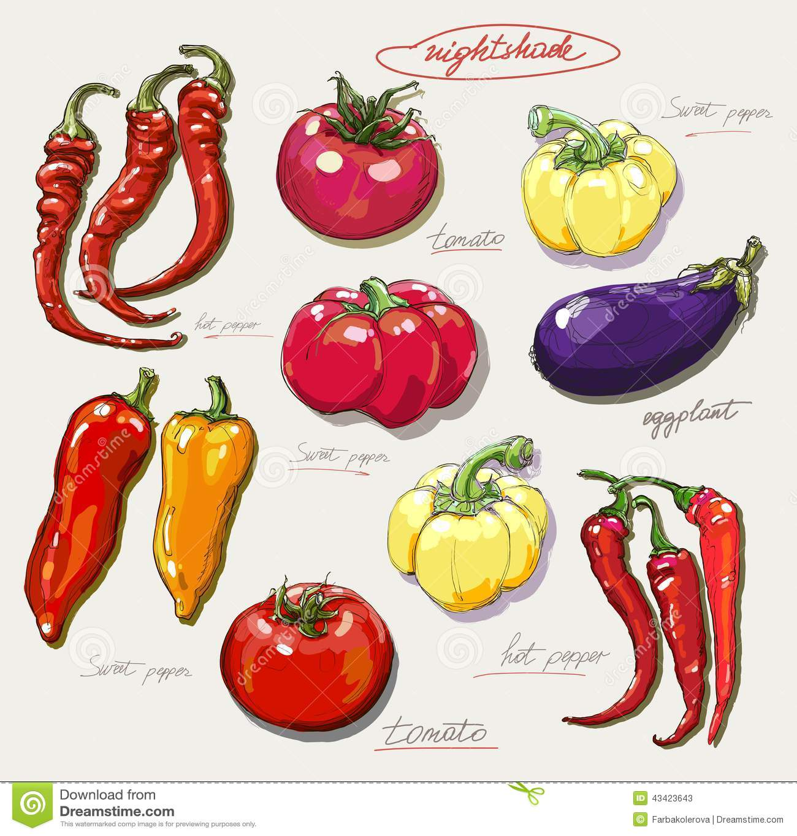 Ensemble r aliste de dessin de main de l gumes - Dessin de legumes ...