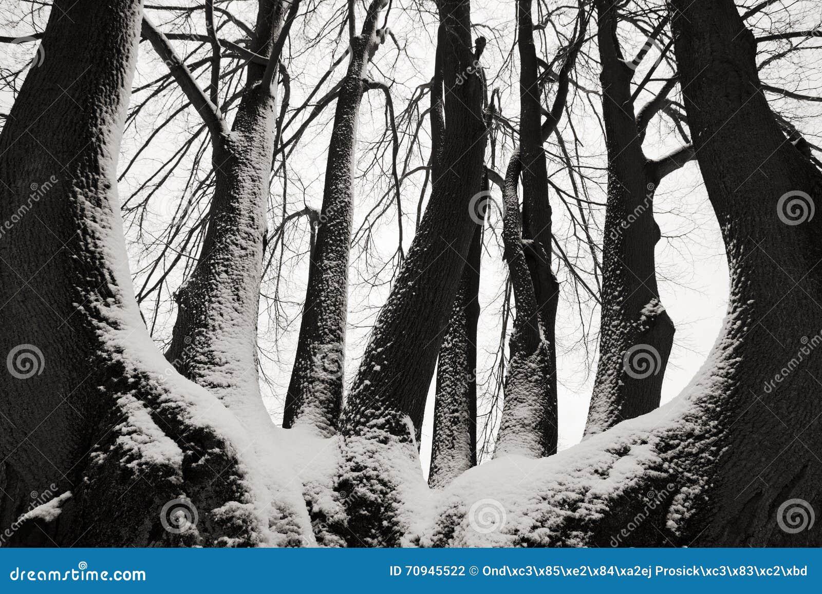 Enslig trädstam i vinter, snöig landskap med snö och dimma, dimmig skog i backgrouden, konstsikt, Europa