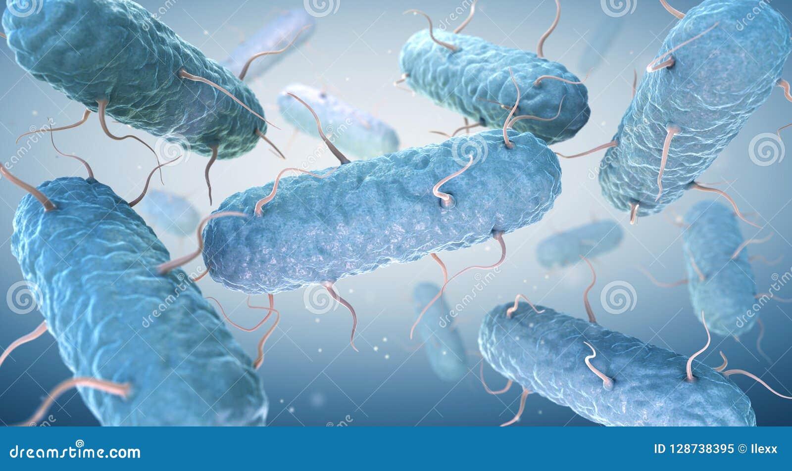 Entérobactères Les entérobactériacées sont une famille nombreuse des bactéries gramnégatives