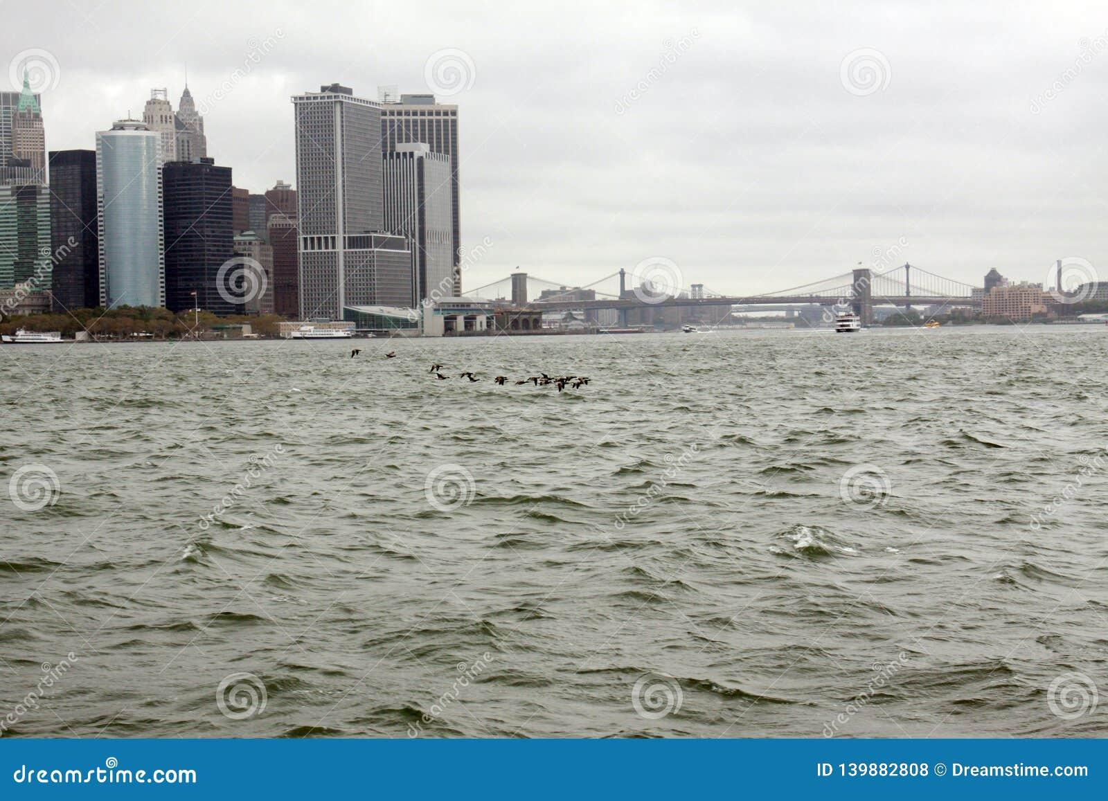Enten auf dem East River