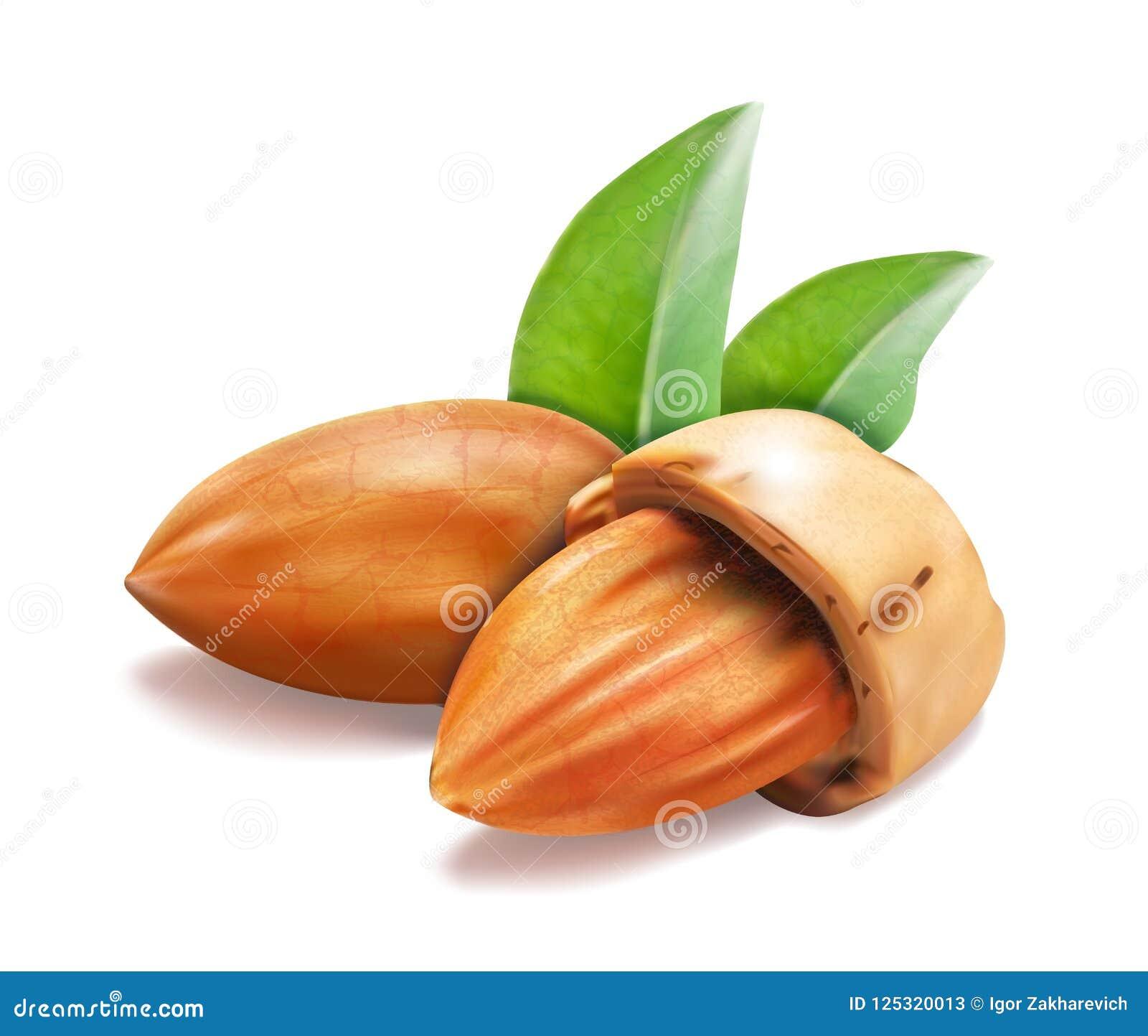 Entier nuts d amande, feuilles de vert