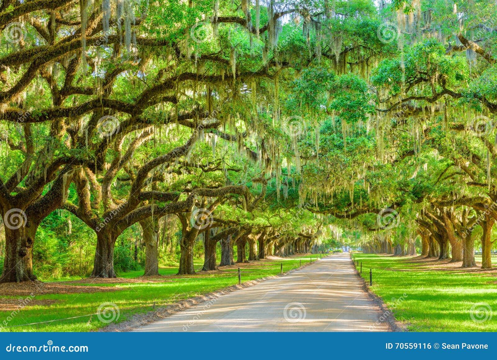 Entrée de plantation rayée par arbre