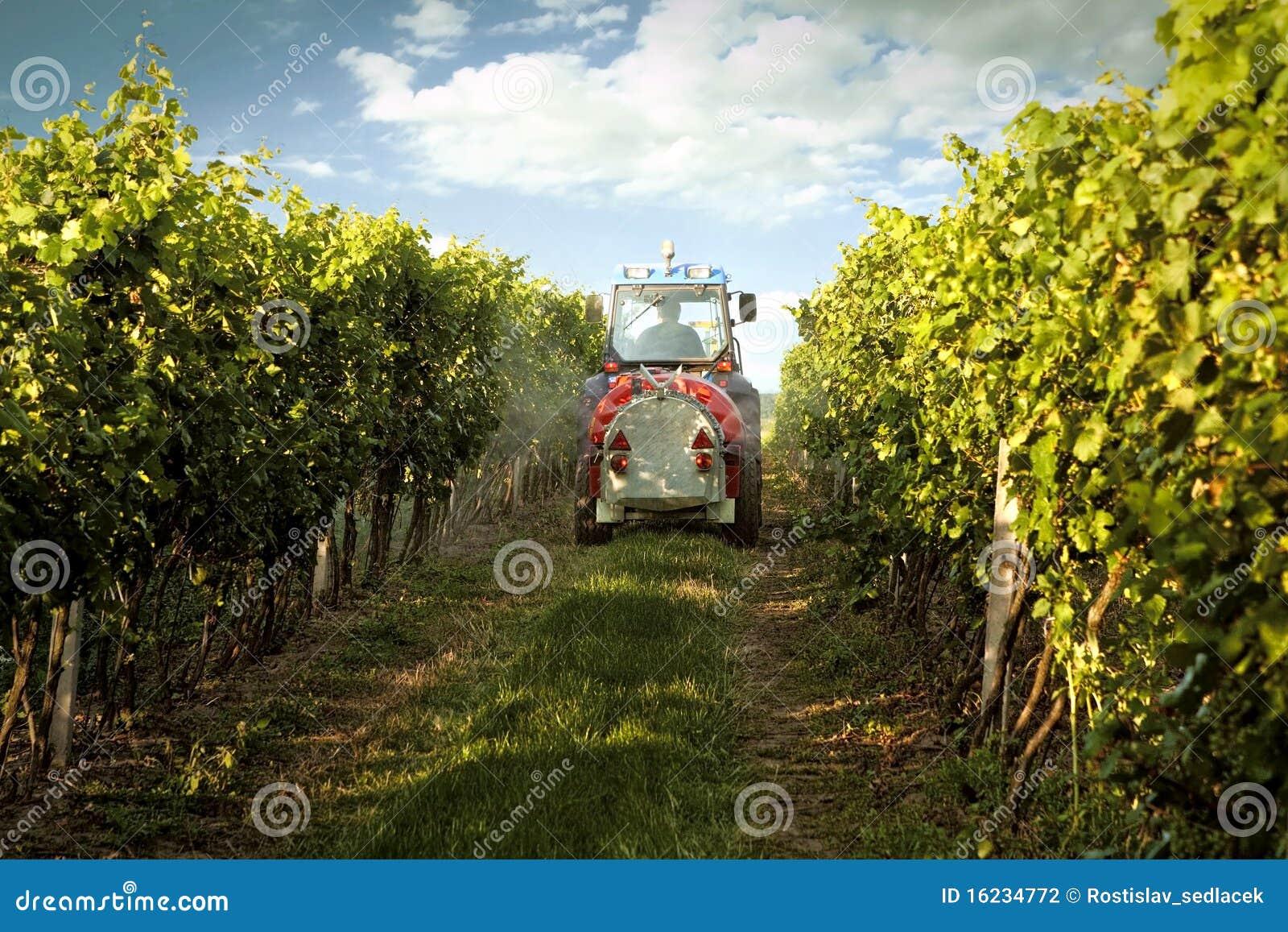 Entraîneur dans la vigne