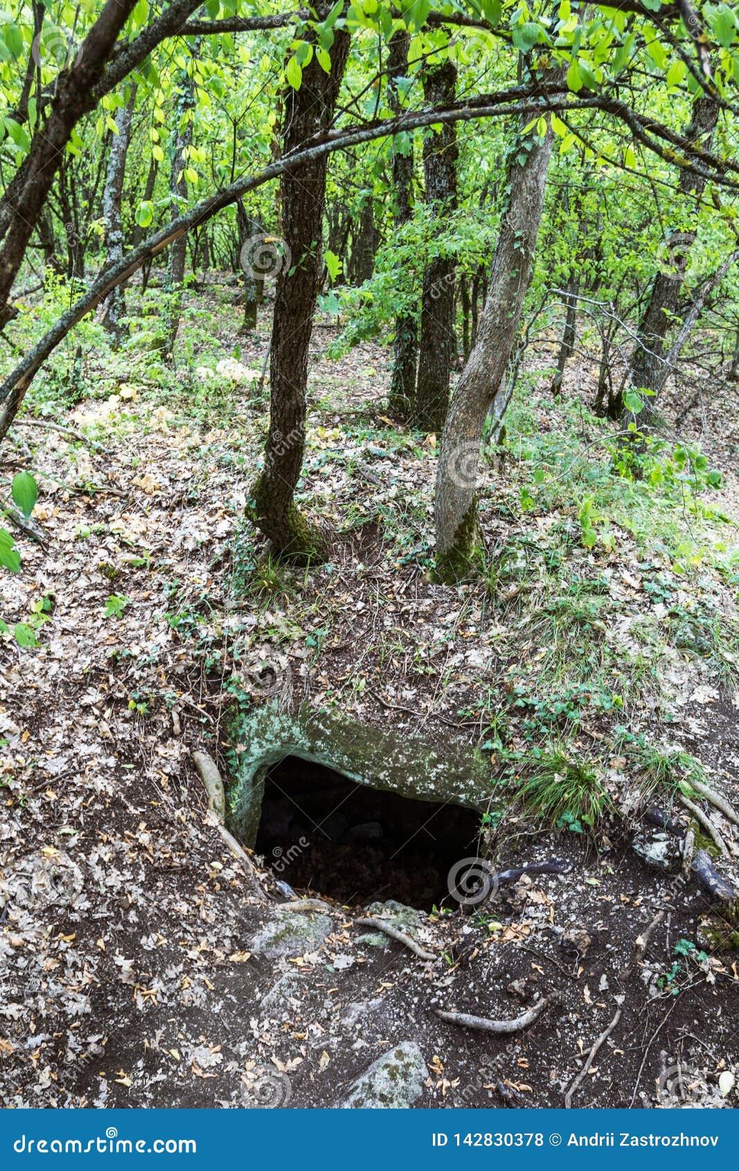 Entrada à caverna escondida nas madeiras