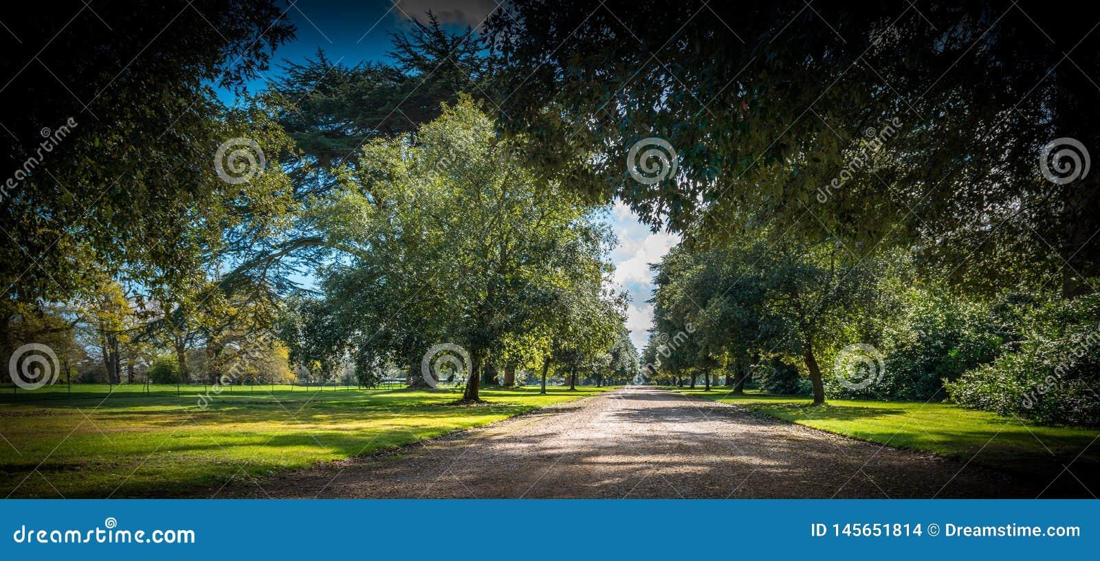 Entrada de automóveis sob o dossel de árvore