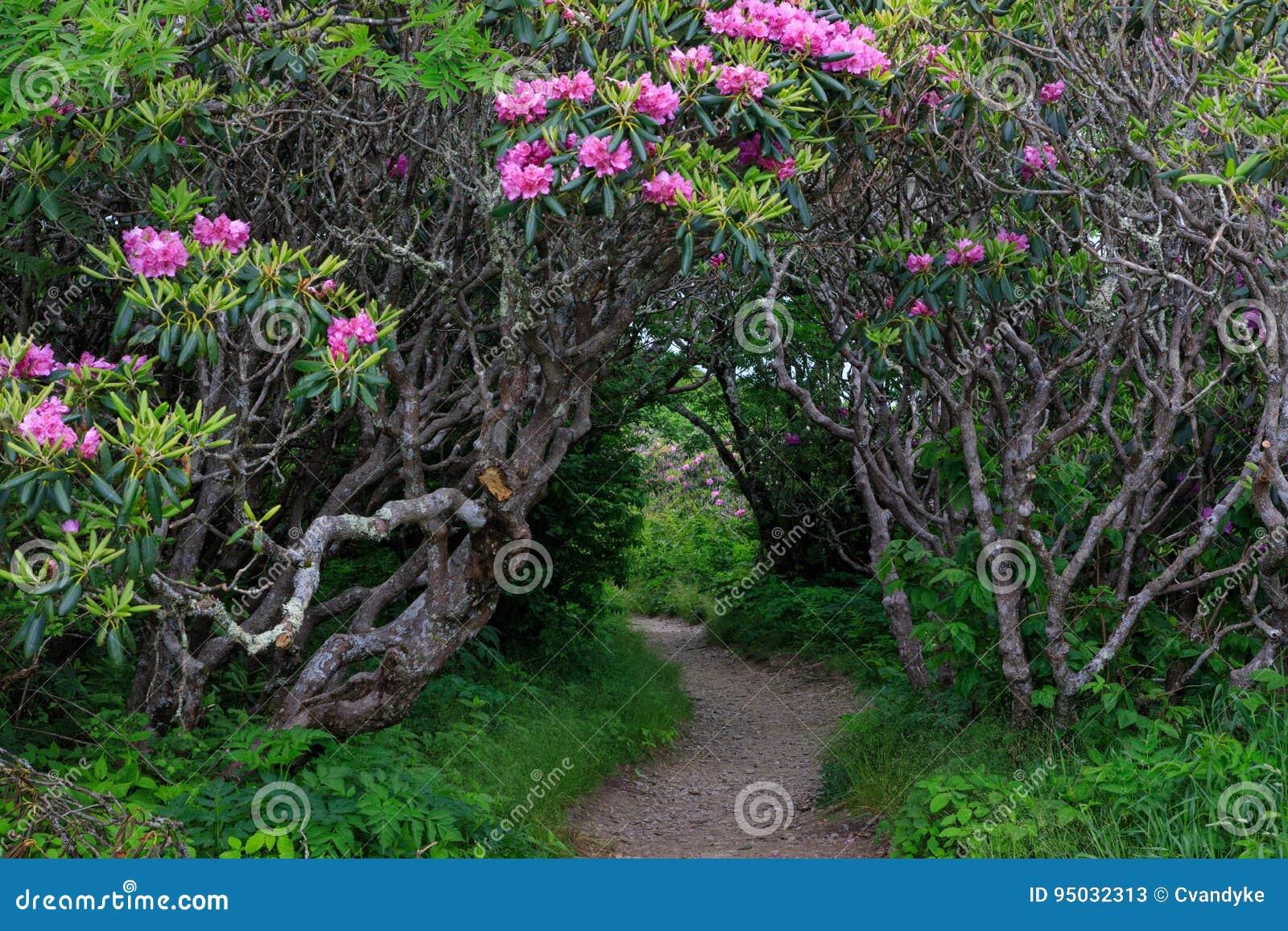 Entrance Craggy Garden Pinnacle Trail North Carolina