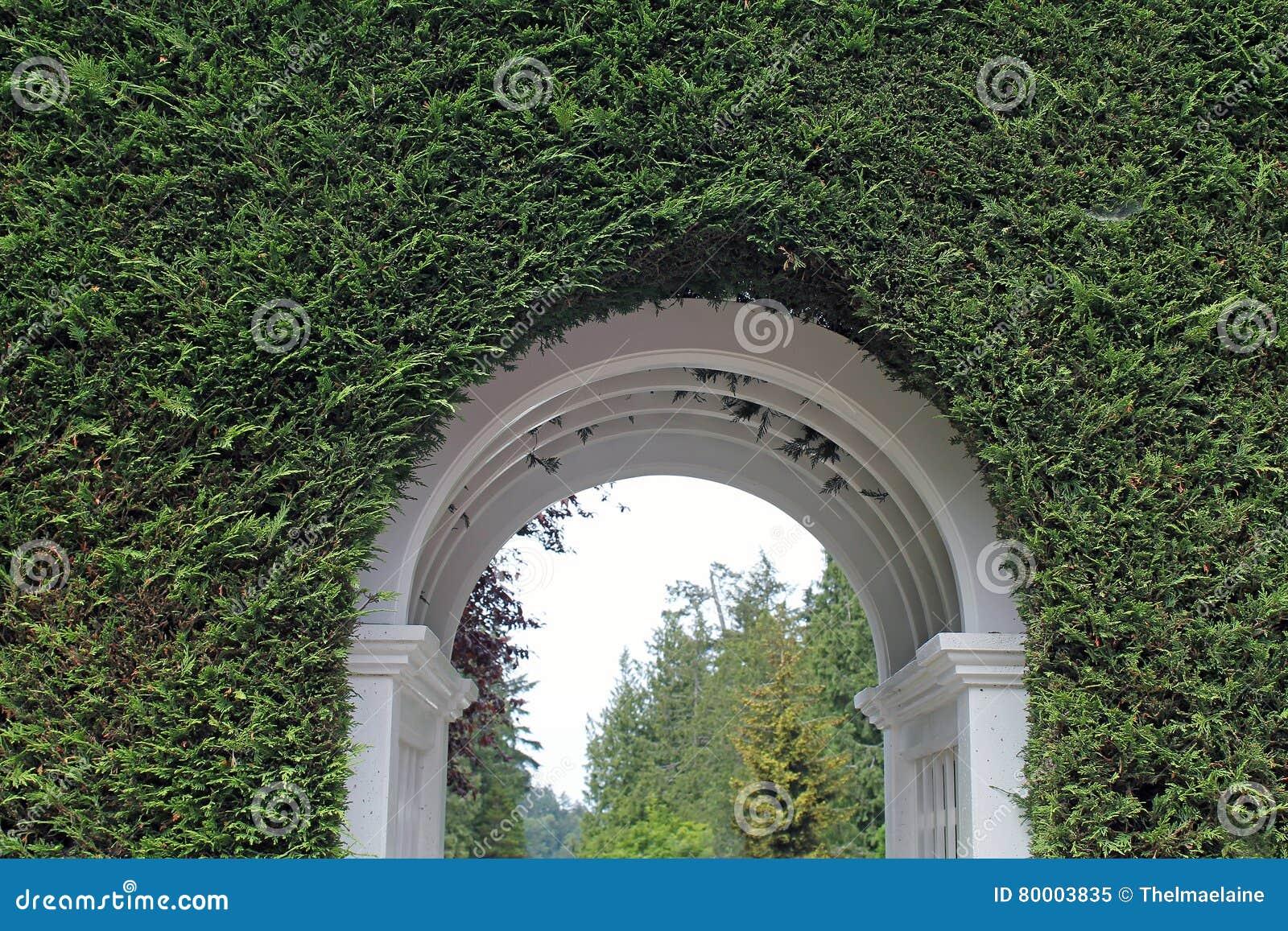 Entrata bianca dell arco attraverso una barriera verde spessa