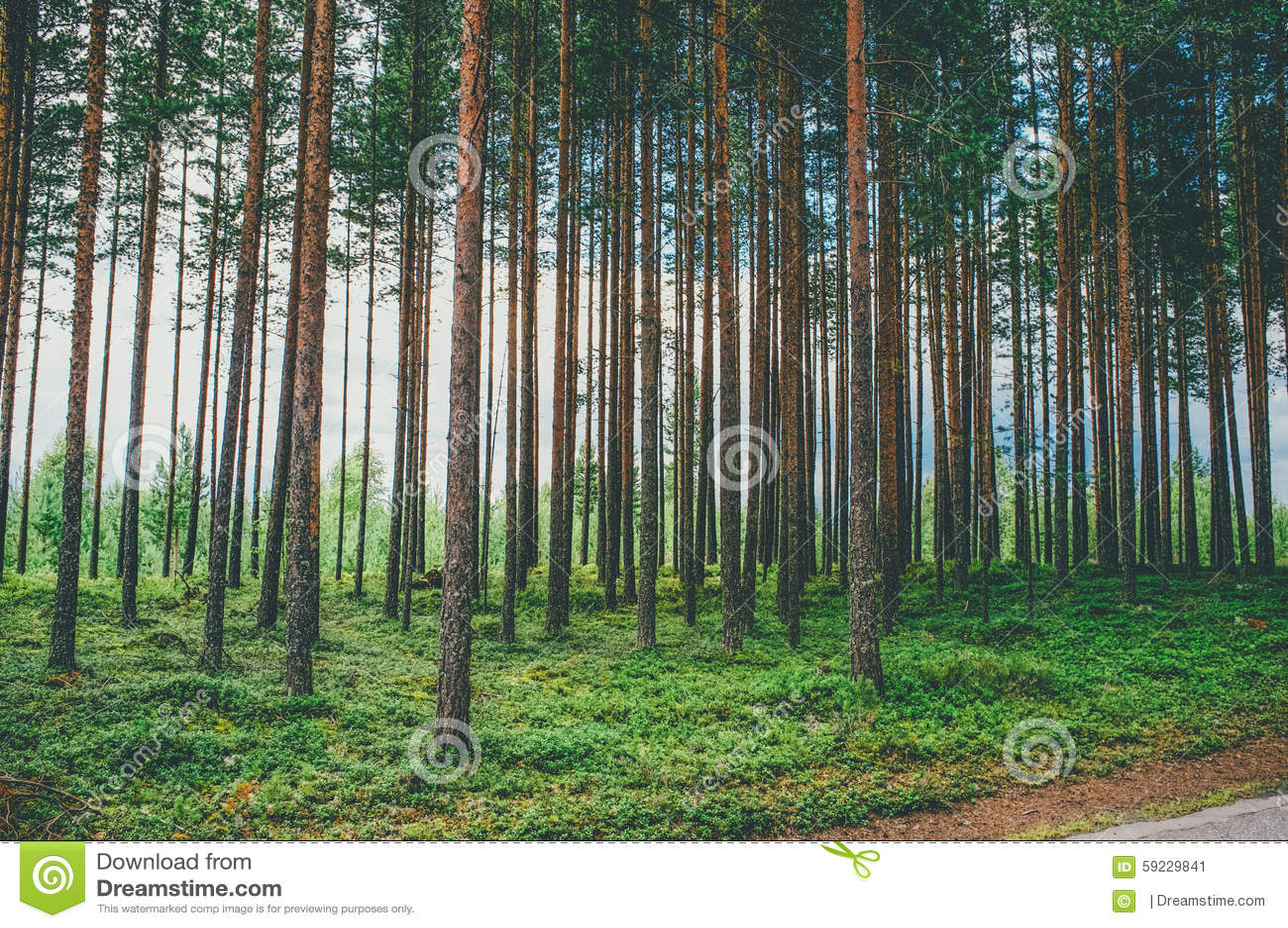 Download Entre imagen de archivo. Imagen de misterioso, madera - 59229841