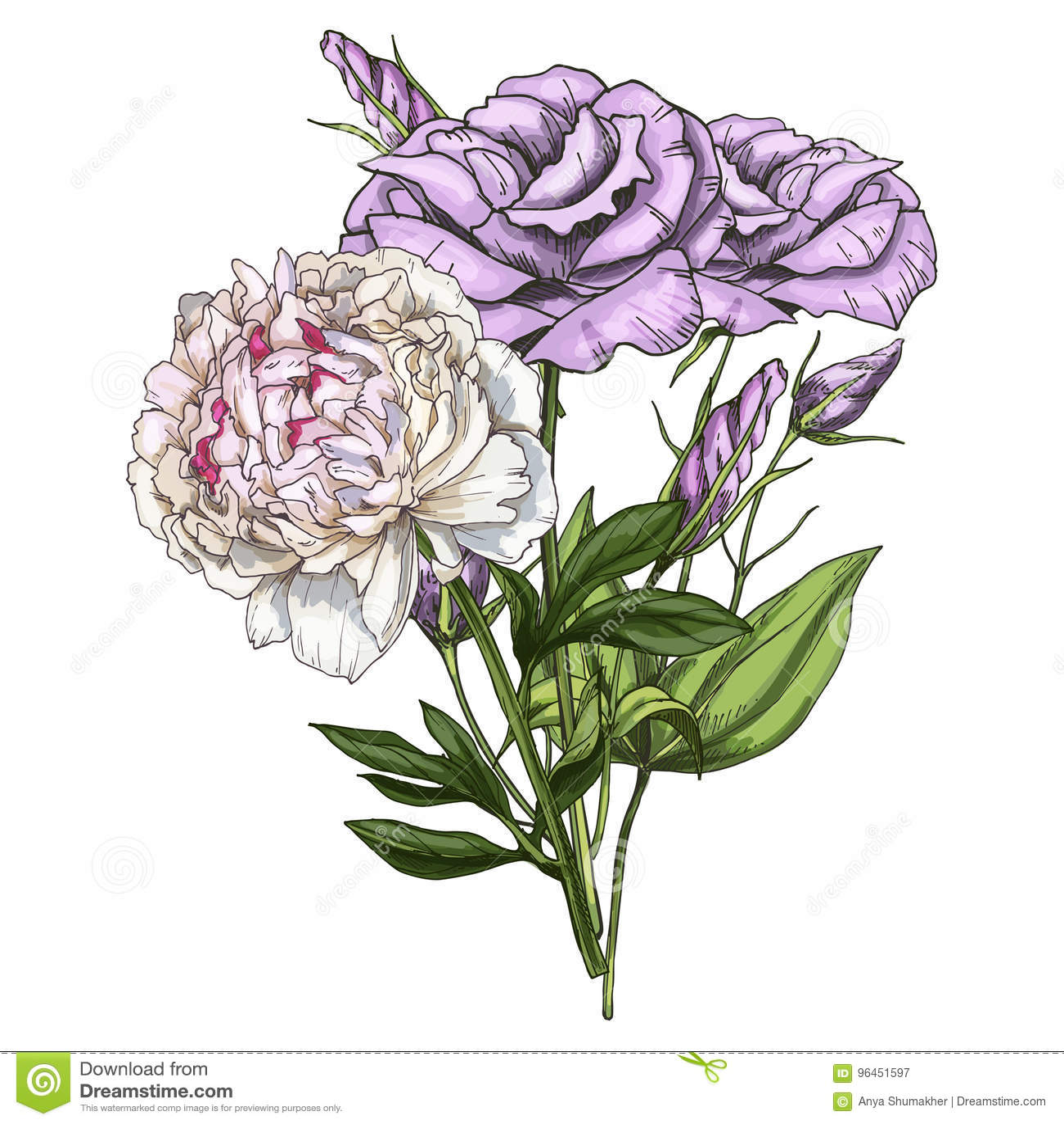 Entregue o ramalhete tirado das flores do eustoma e da peônia isoladas no fundo branco Ilustração botânica