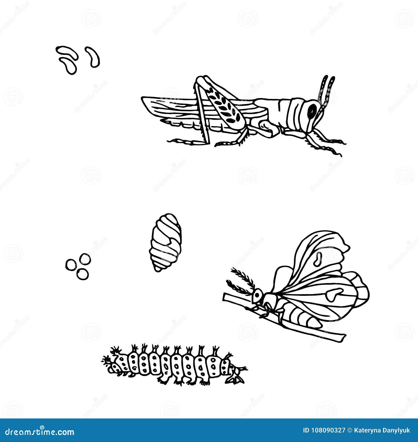entregue a tinta tirada a borboleta monocromática gafanhoto ovo