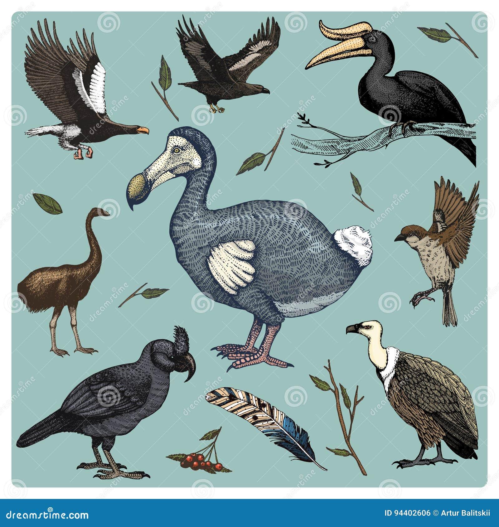 Entregue a vetor tirado o pássaro realístico, estilo gráfico do esboço, grupo de doméstico abutres de griffon e papagaio largo-fa