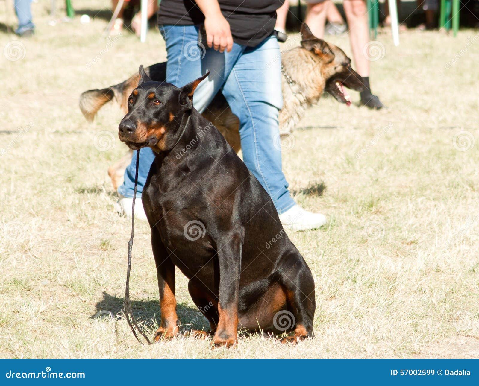 perro entrenamiento: