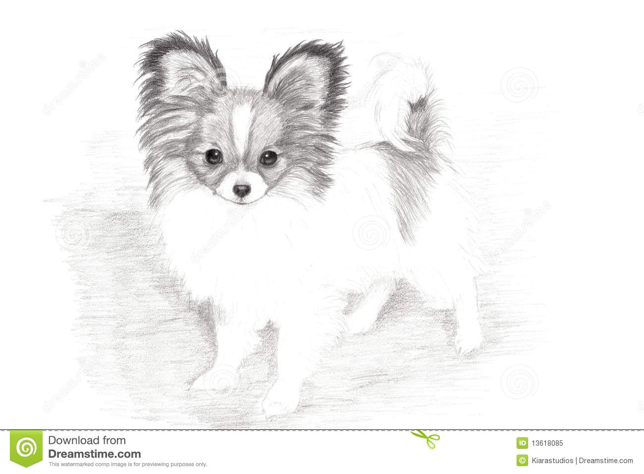 Papillon Dog Uk