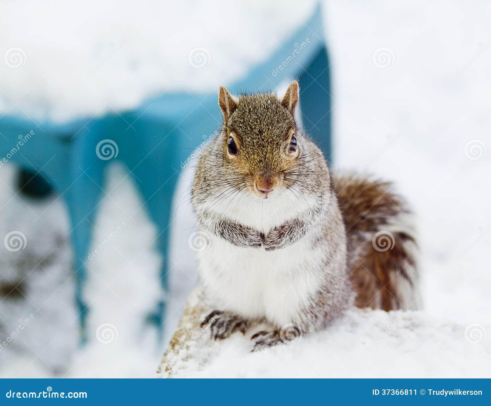 Entzückendes Eichhörnchen
