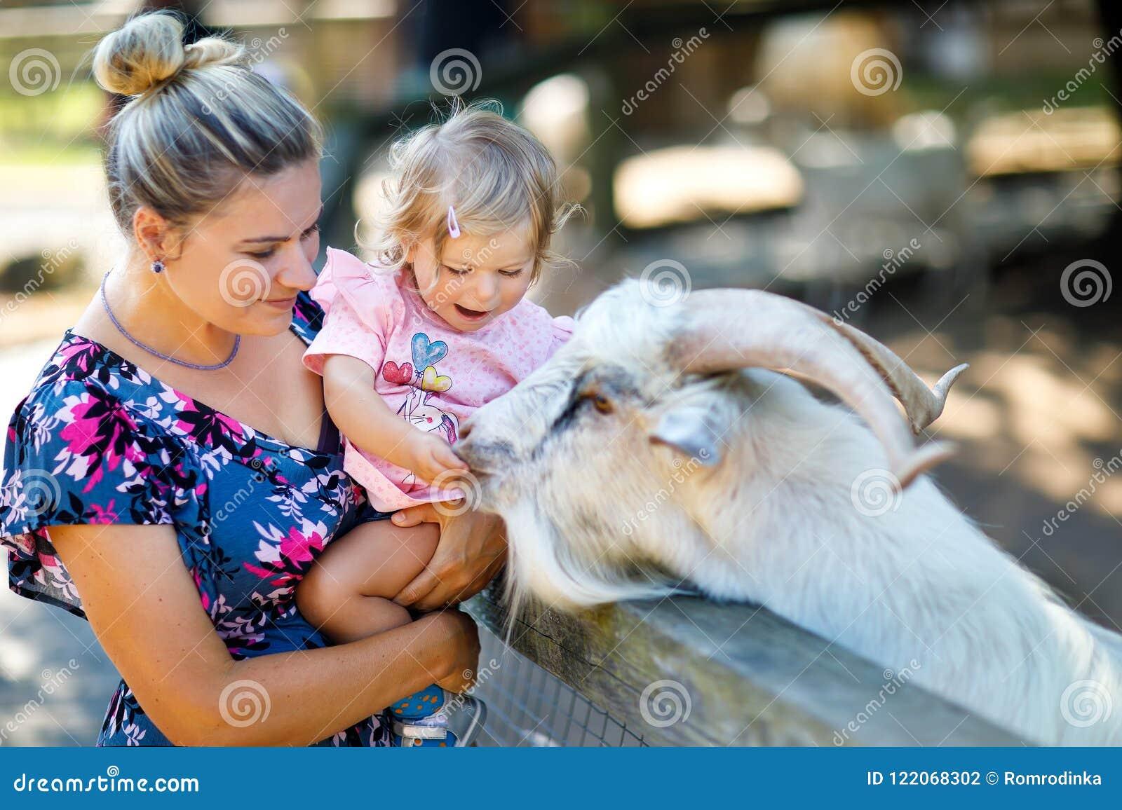 Entzückendes nettes Kleinkindmädchen und junge die Mutter, die kleine Ziegen und Schafe auf Kinder einzieht, bewirtschaften Schön