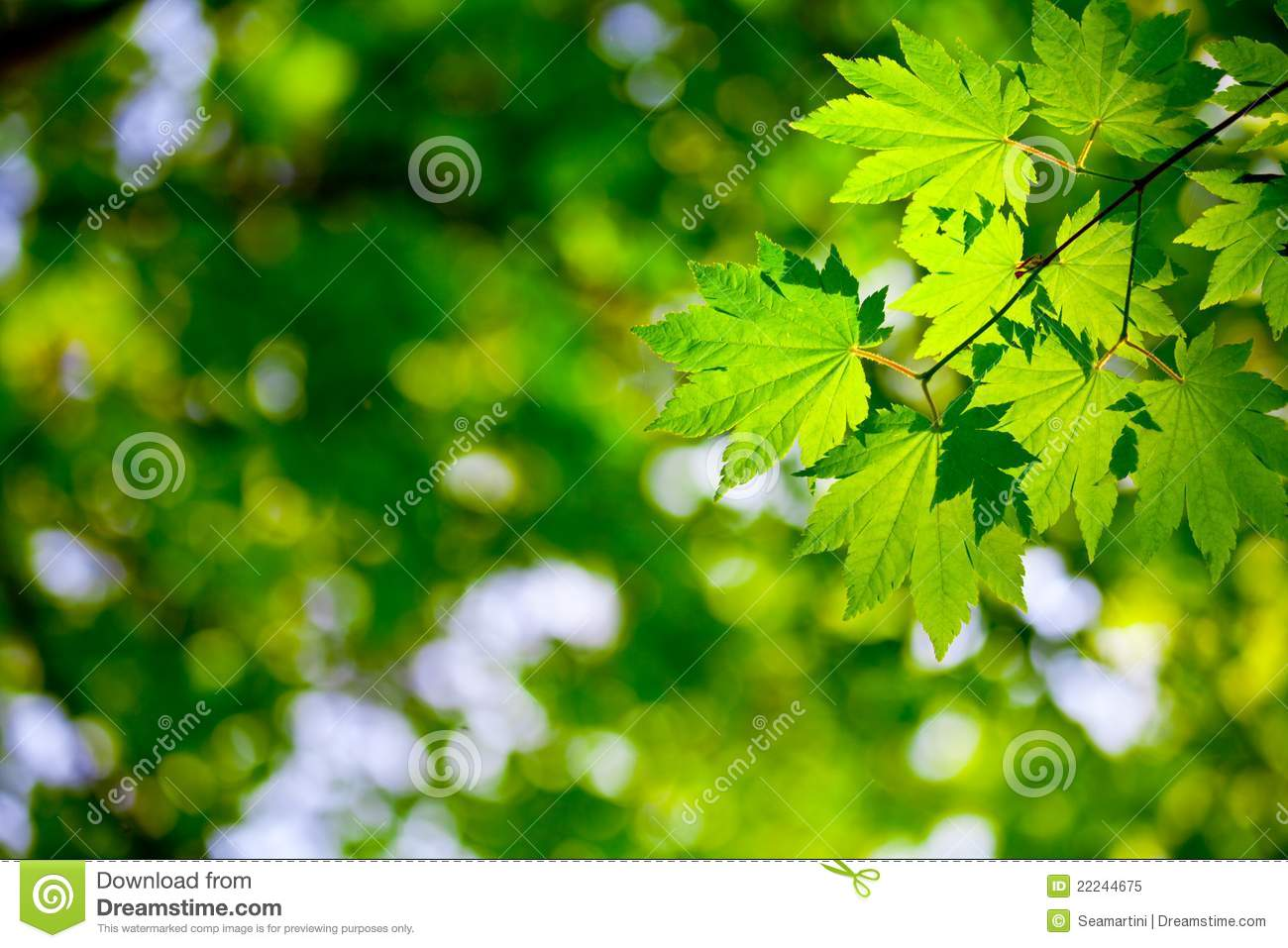 environment background stock image  image of floral