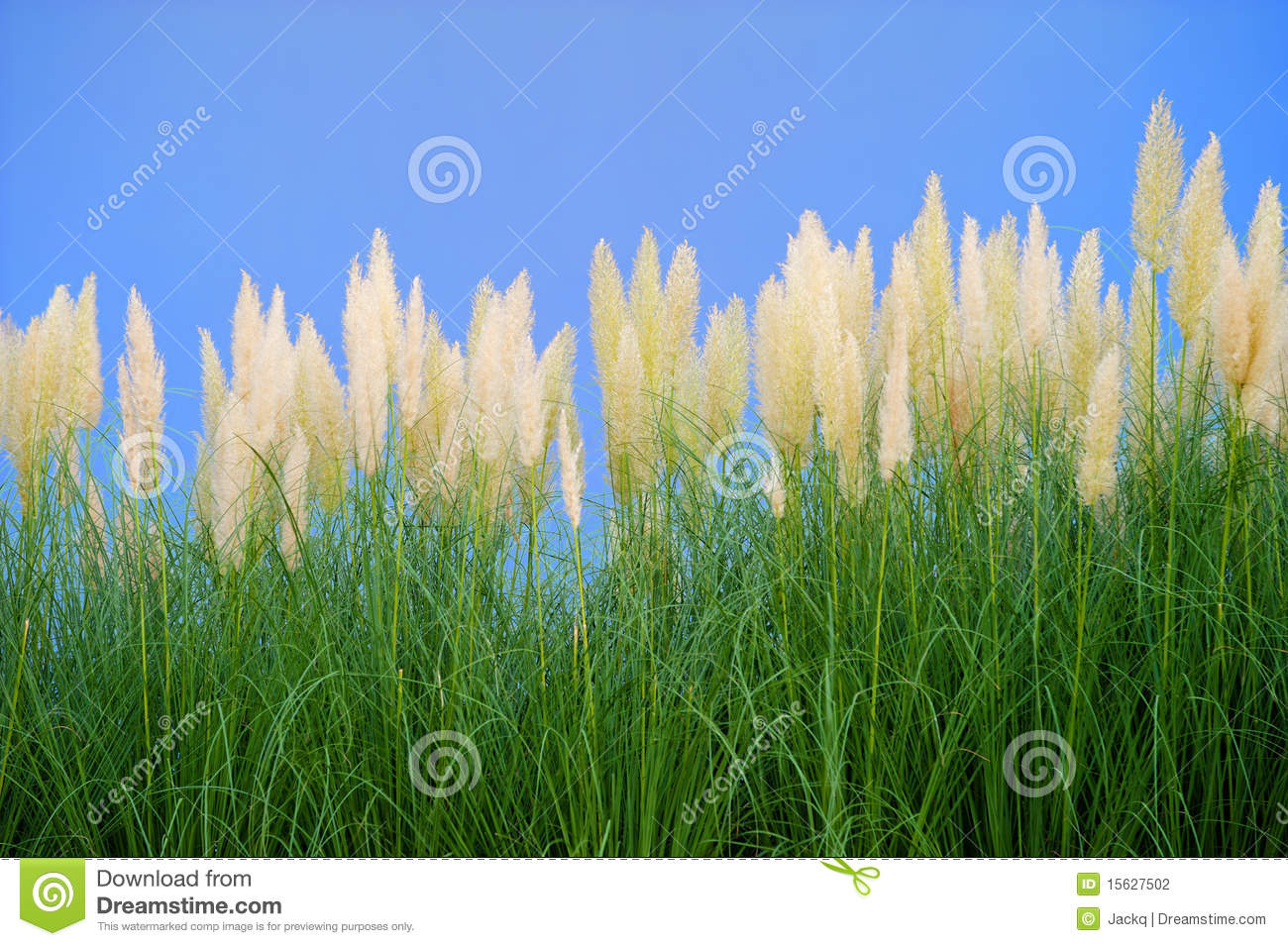 environment-friendly-reeds-15627502.jpg