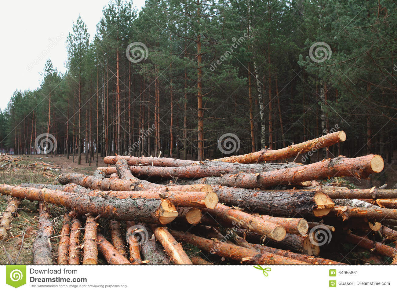 Nature Images 2mb: Environment, Nature And Deforestation Forest