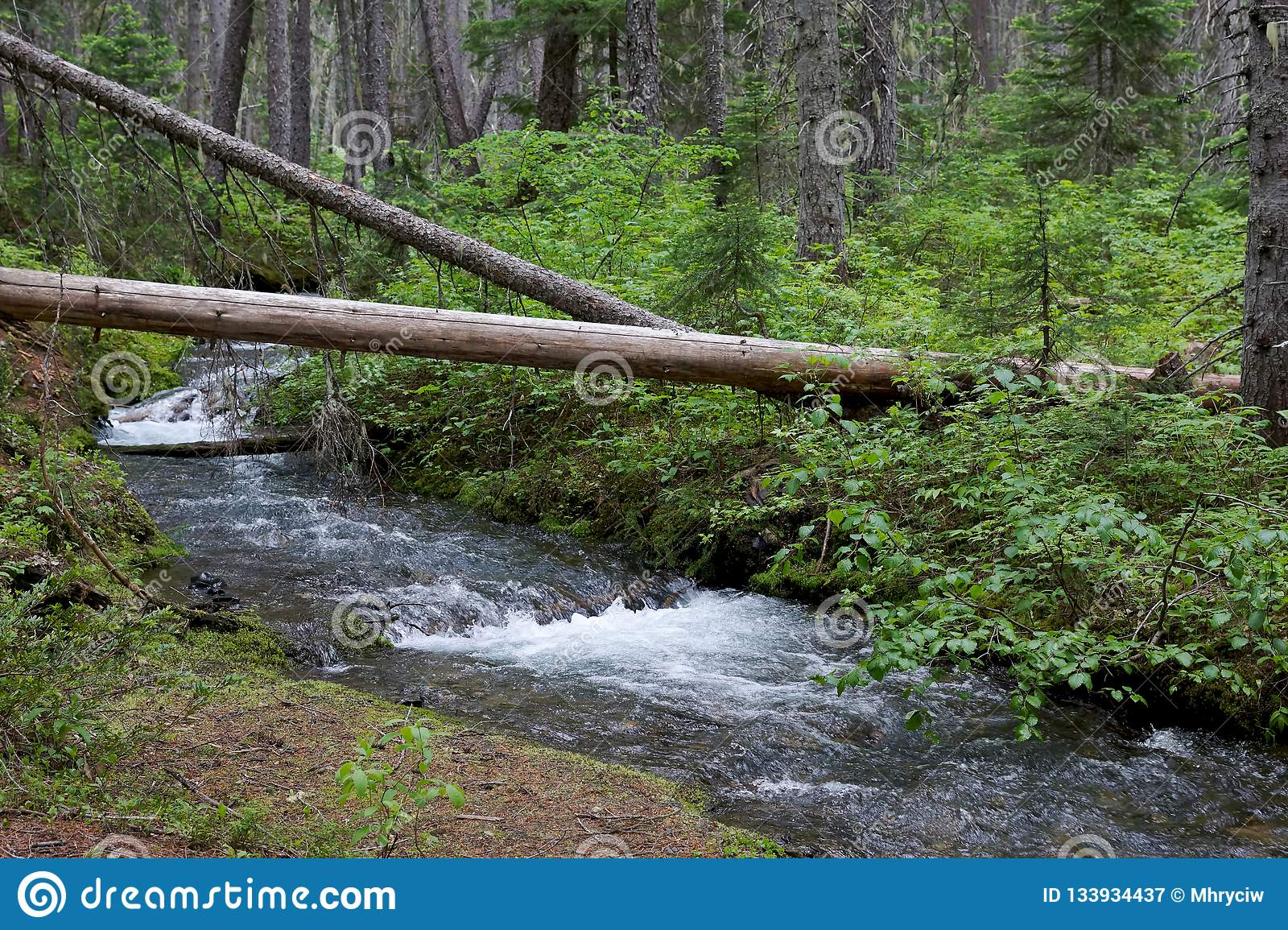 Environnement de Forest Stream Wilderness Canada Green