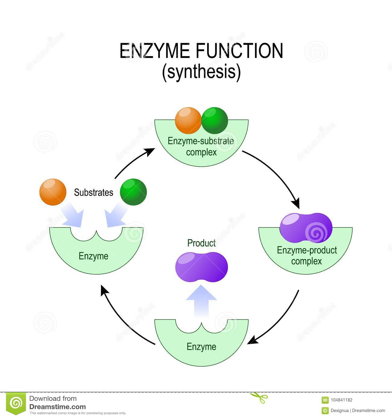 Enzyme Function. Synthesis. Substrate, Product, Enzyme-product C Stock  Vector - Illustration of disease, education: 104841182Dreamstime.com