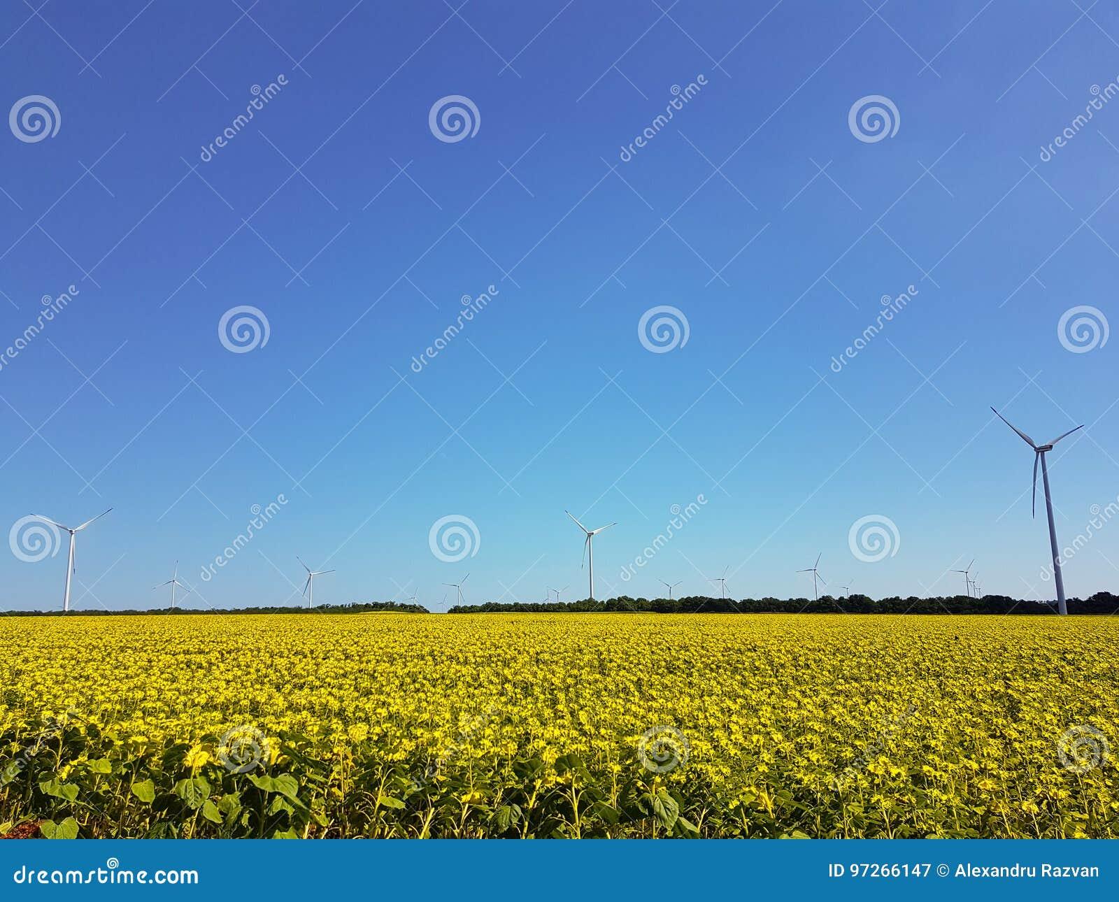 Eolian fält
