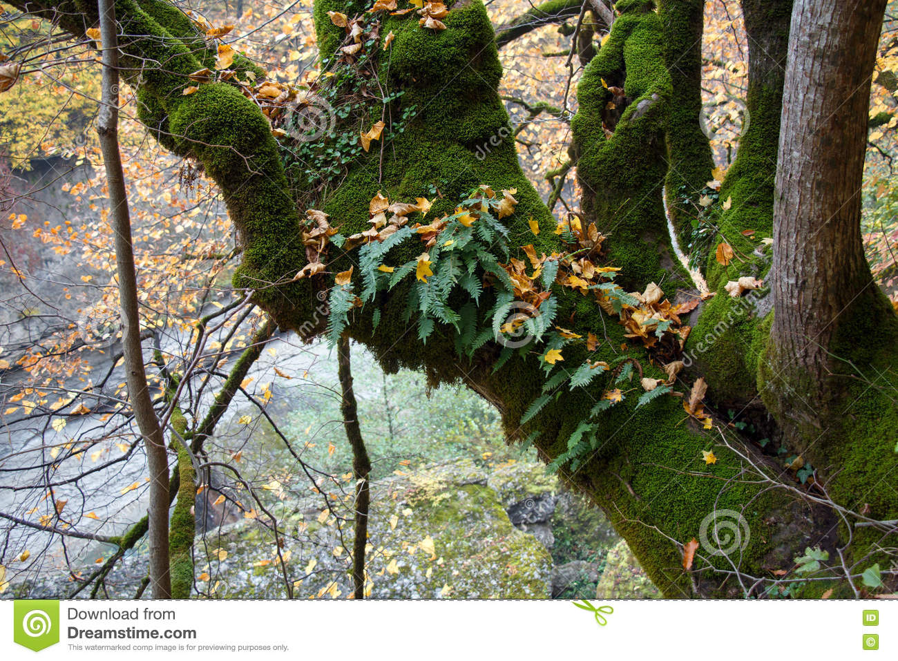 An epiphyte plants moss and fern growing on tree trunk stock photo image 77478637 - Flowers that grow on tree trunks ...