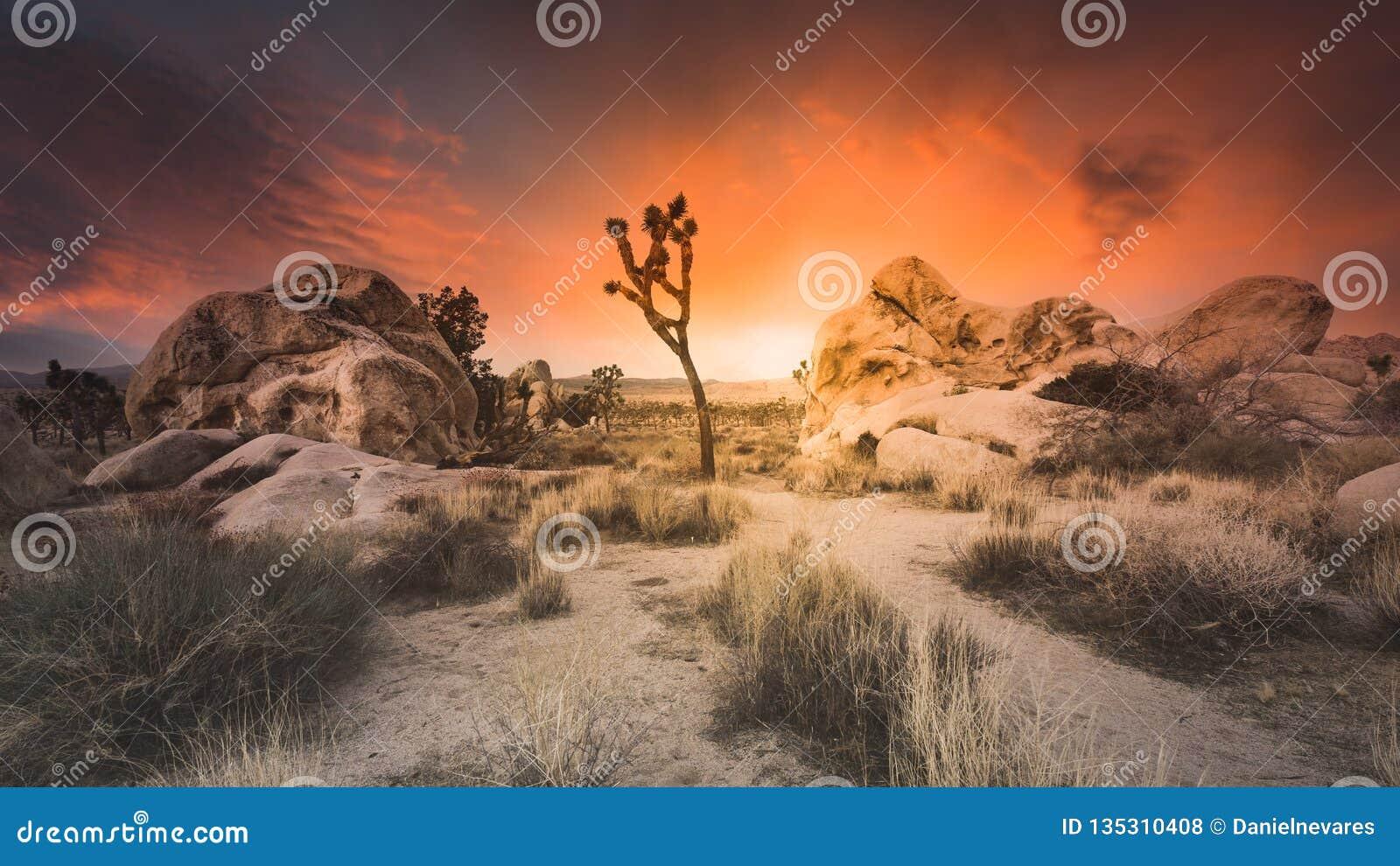 Epischer trockener Wüsten-Sonnenuntergang über Joshua Tree National Park Boulders und hohem Gras