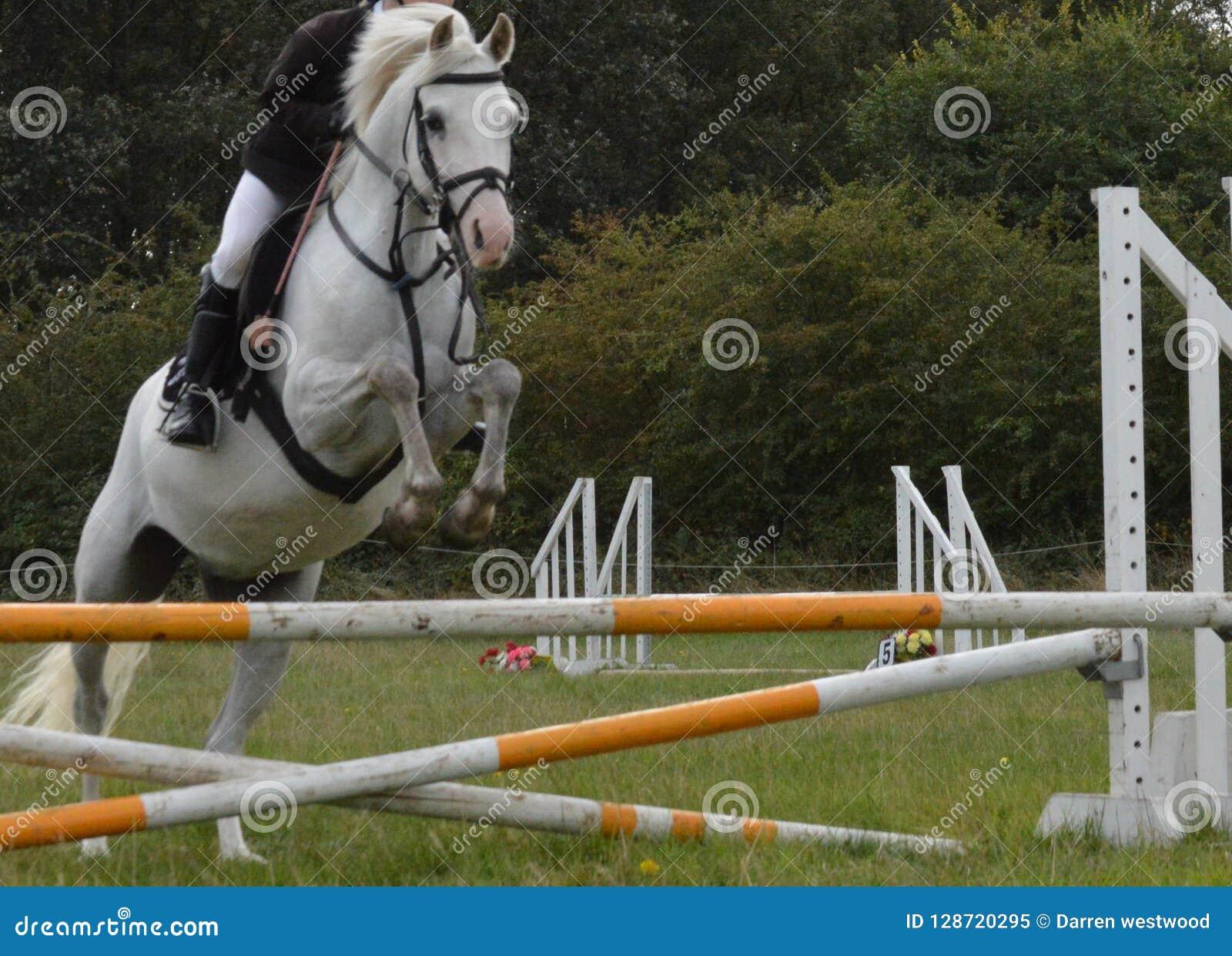 Horse And Rider Jumping A Hurdle Stock Image Image Of Active Saddle 128720295