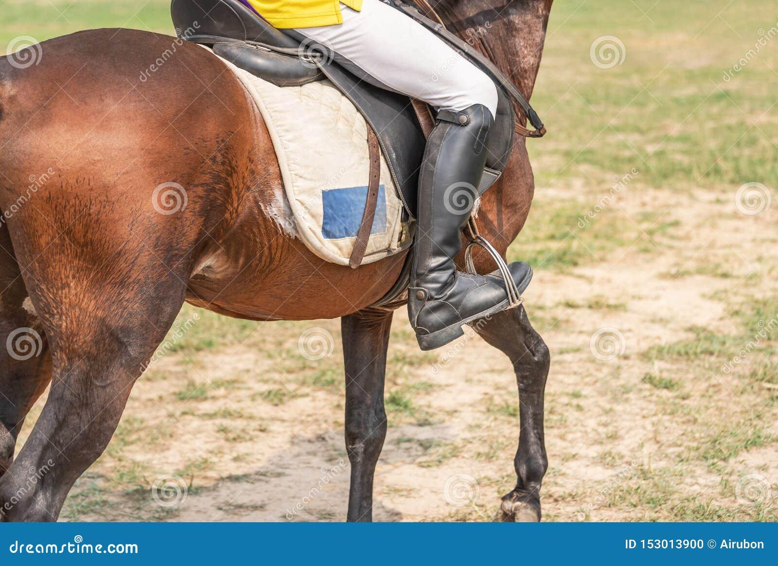Equestrians podczas treningów grżą w górę przygotowywają rywalizację w biegowym kursie