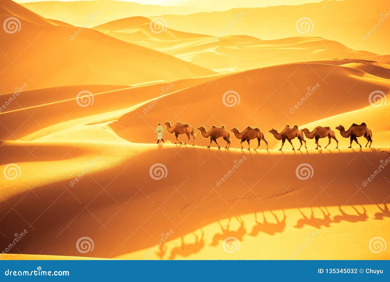 Equipe dos camelos do deserto