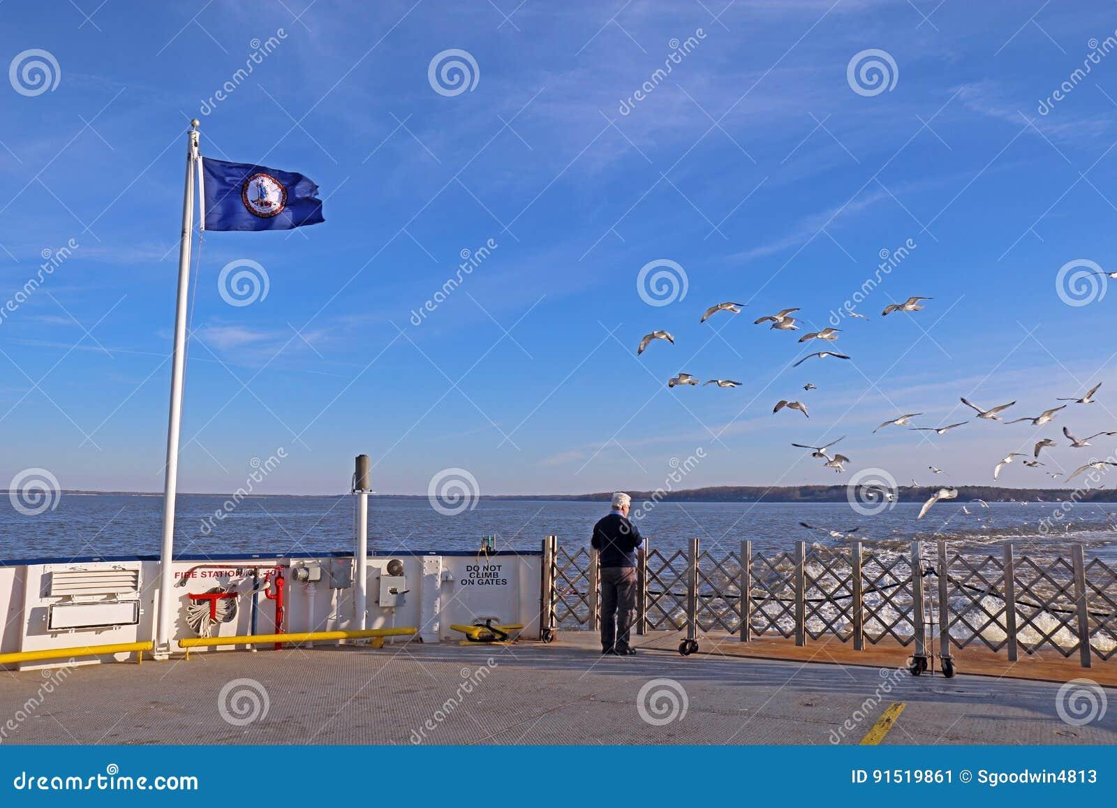 Equipe gaivota de mar de alimentação de um ferryboat de Jamestown-Escócia