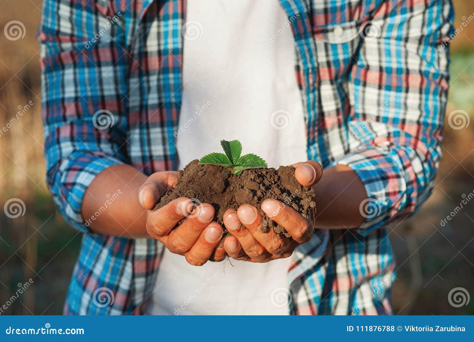 Equipe o fazendeiro que mantém a planta nova nas mãos contra o fundo da mola Conceito da ecologia do Dia da Terra Feche acima do