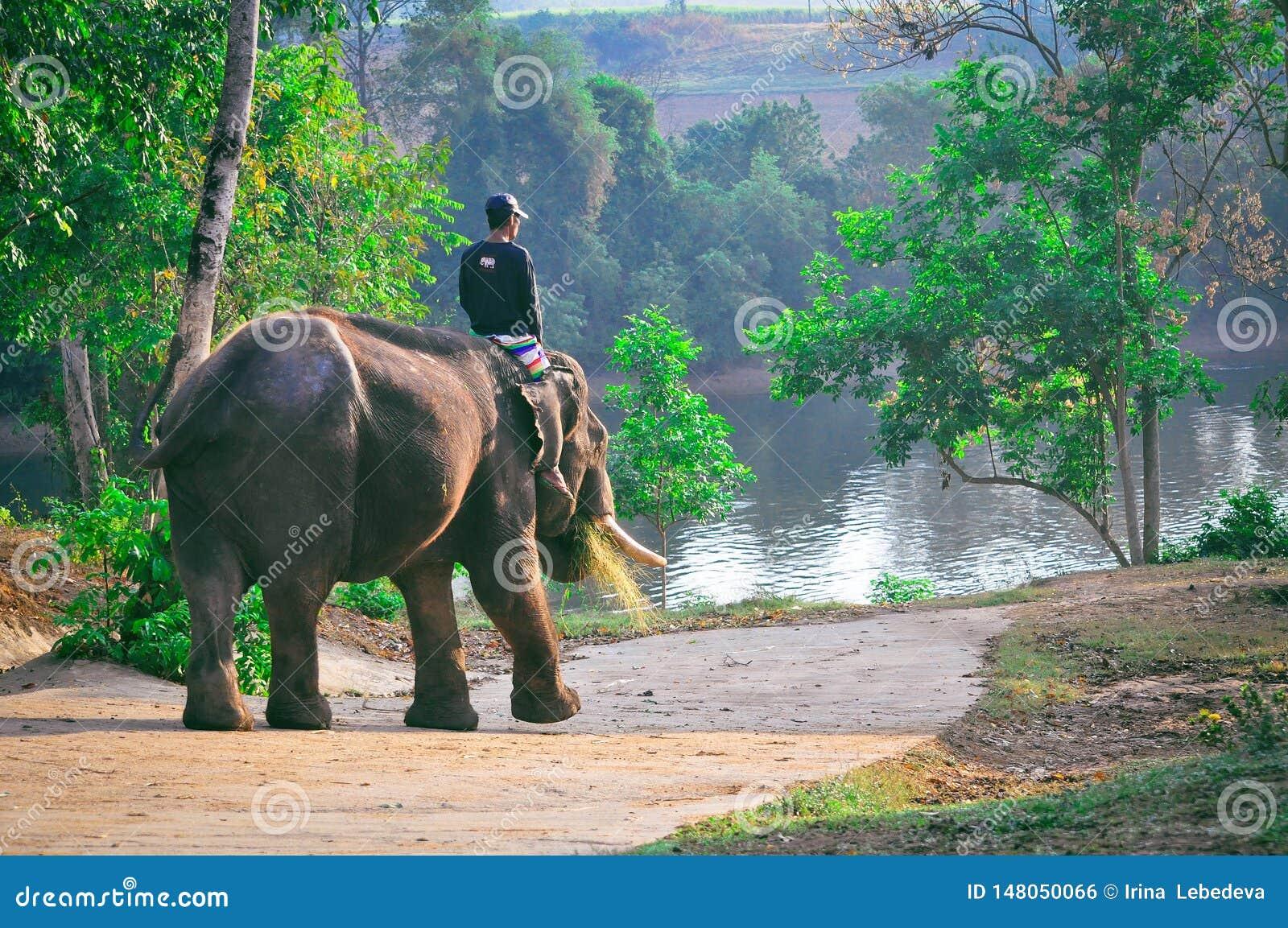Equitação do elefante na floresta úmida em Tailândia