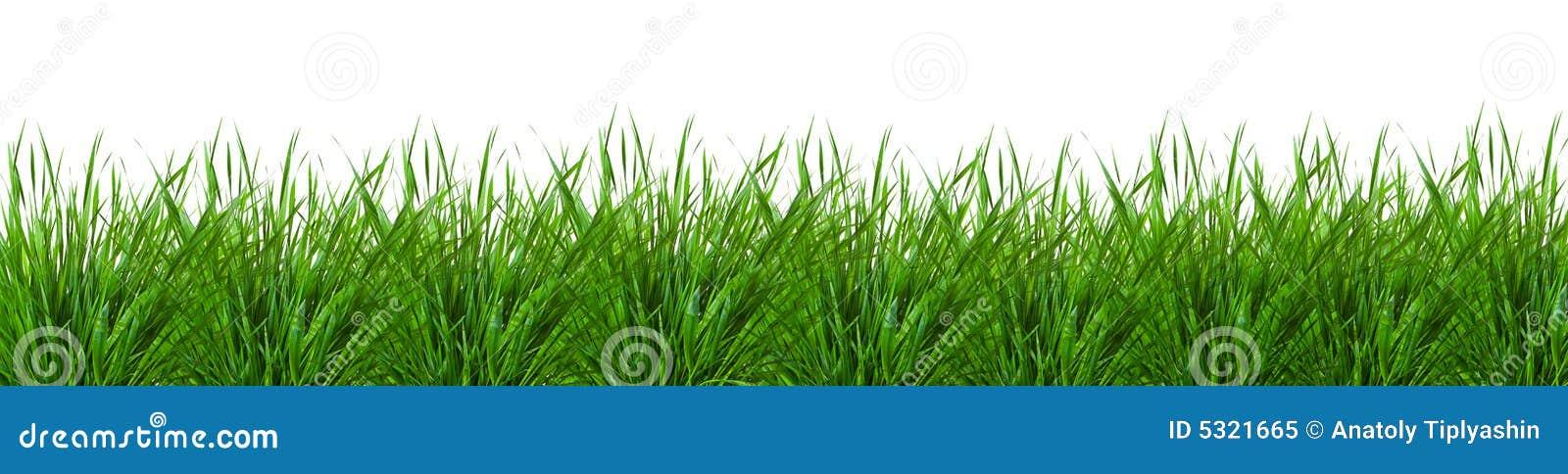 Download Erba immagine stock. Immagine di campo, pianta, aperto - 5321665